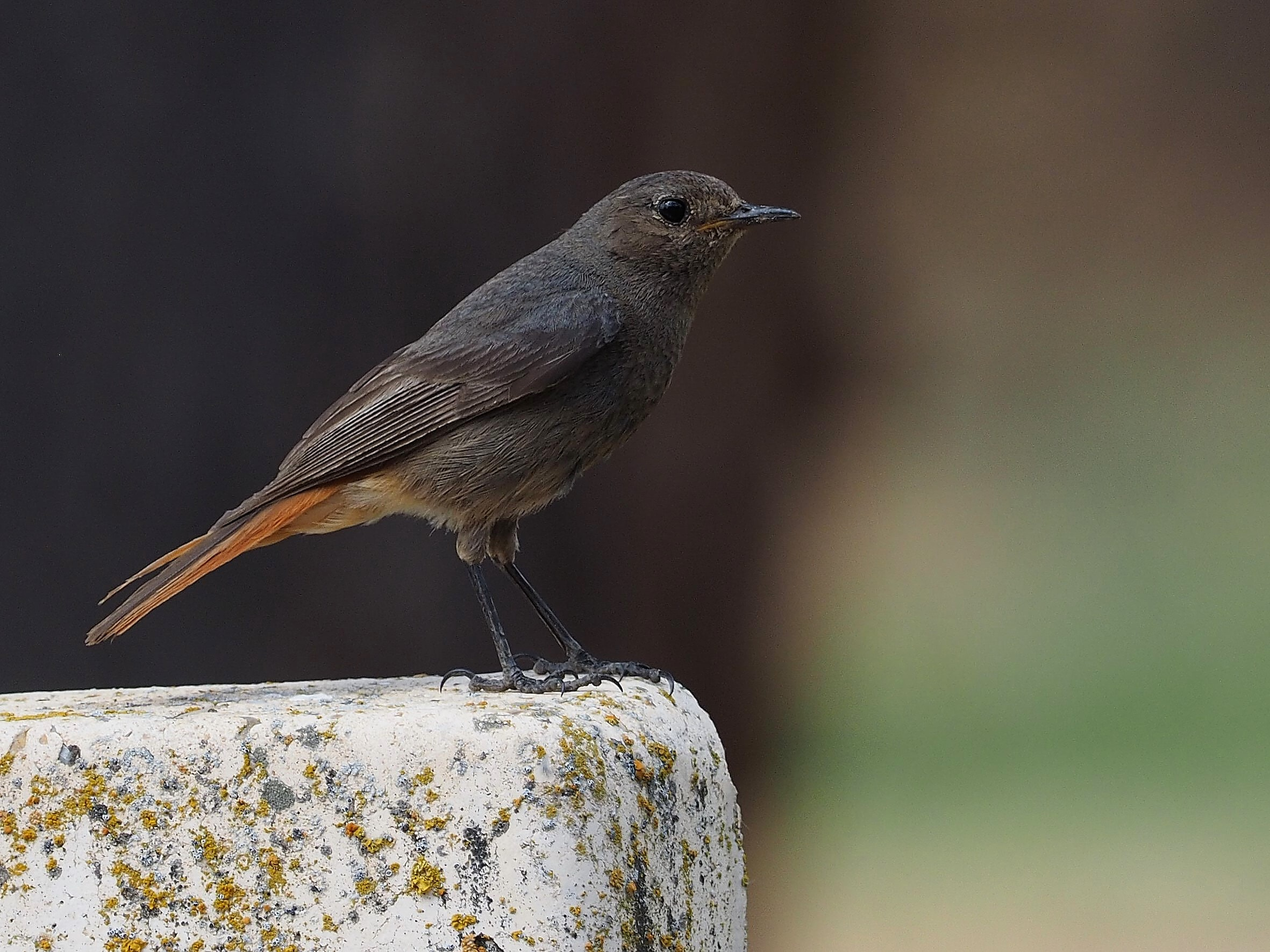 gray bird on brown stone in selective focus photography