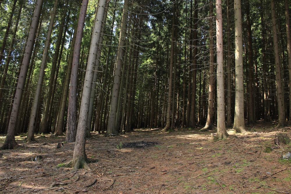 forest under blue sky during daytime