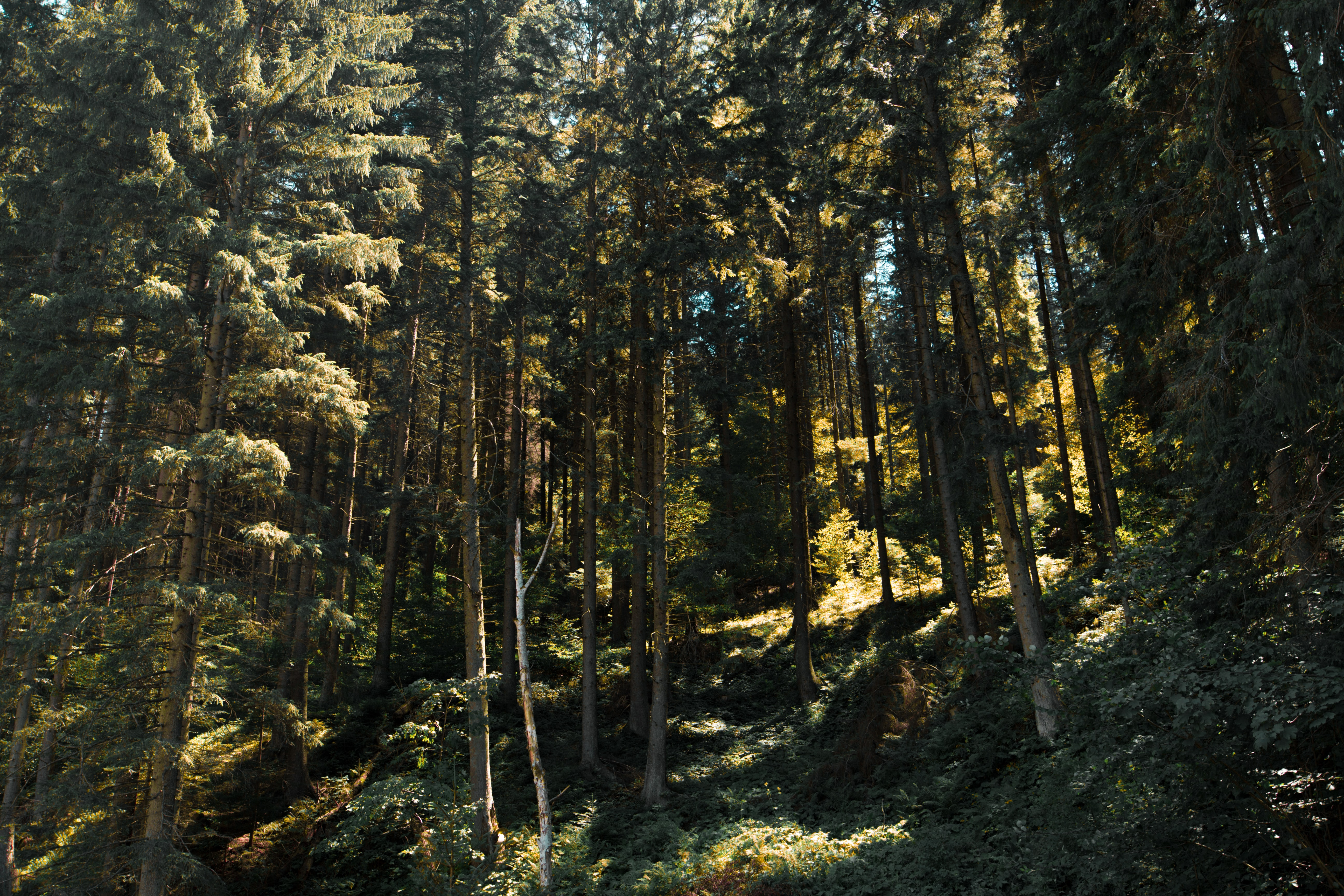 forest trees during daytime