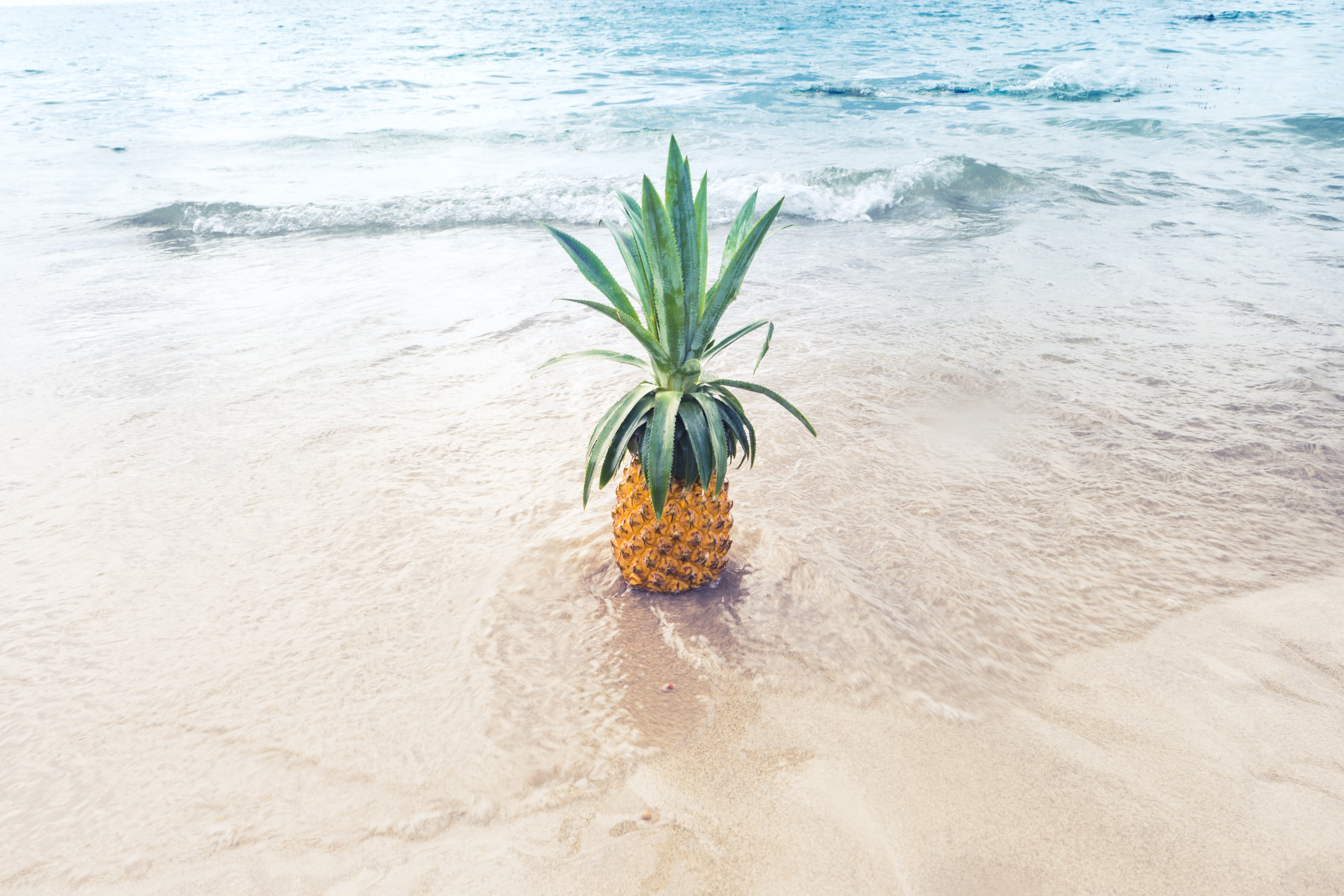 A pineapple on the beach with tidewwater.