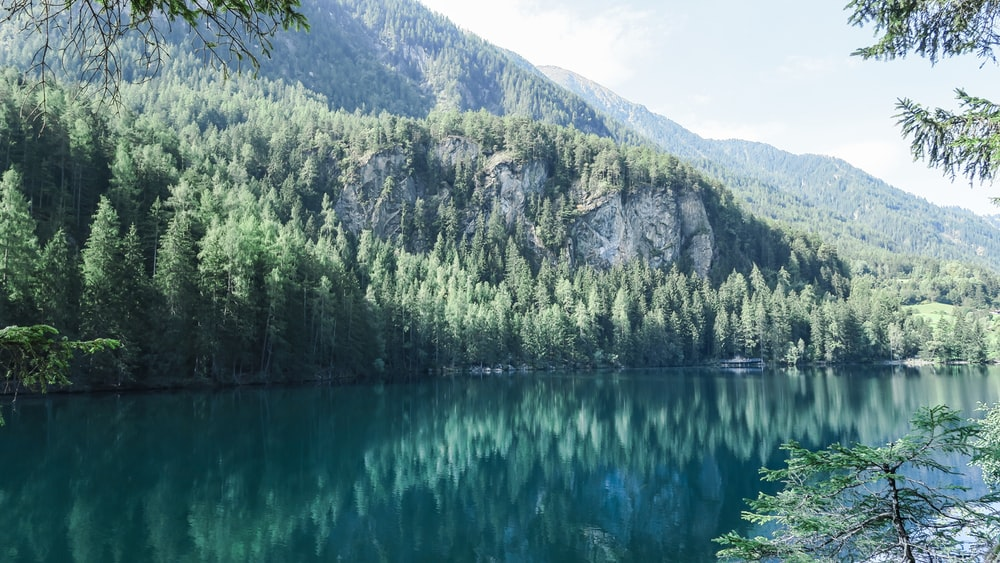green pine trees near body of water with distance to mountain