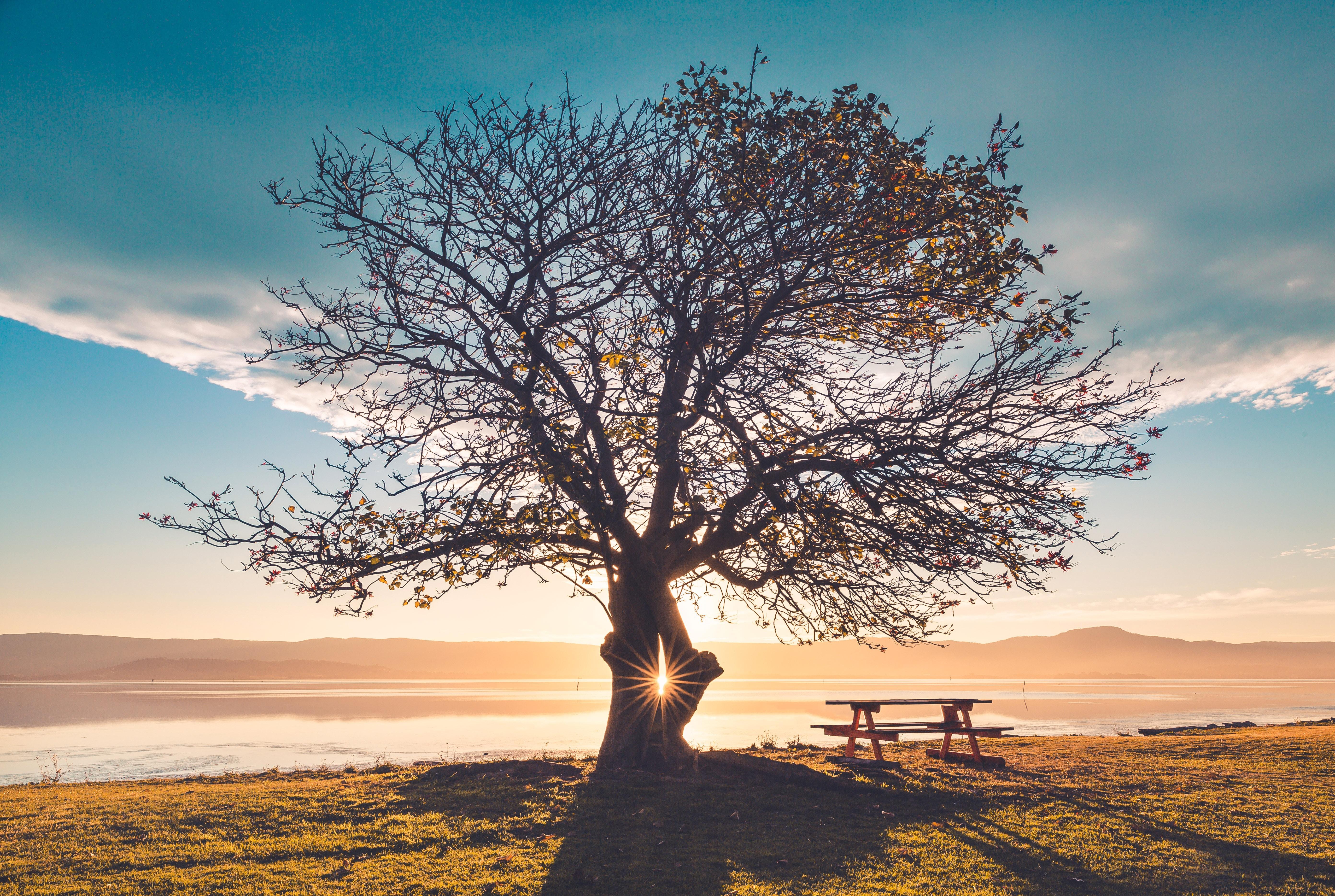 silhouette of tree near sea