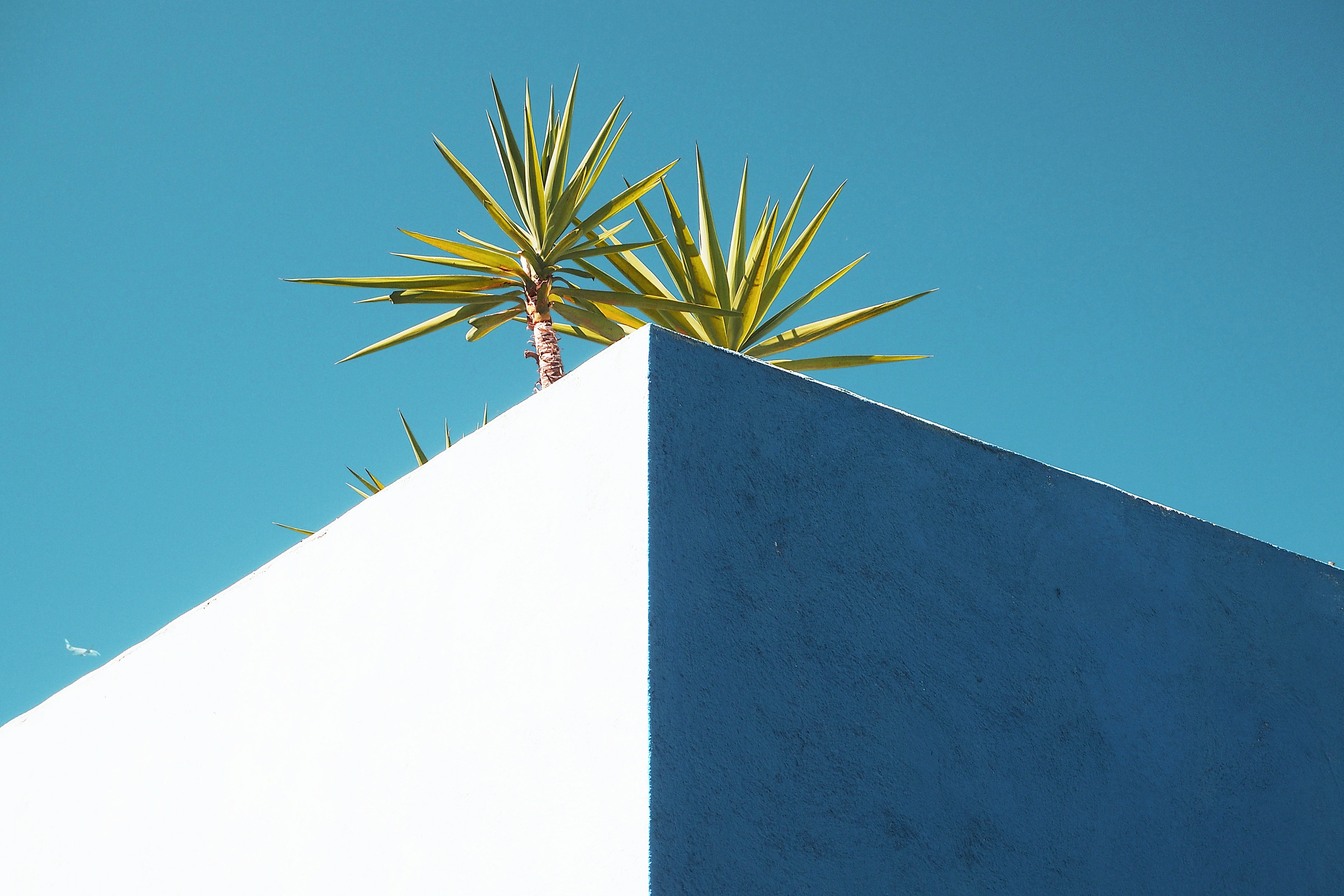 Small palm trees on the edge of a white building roof