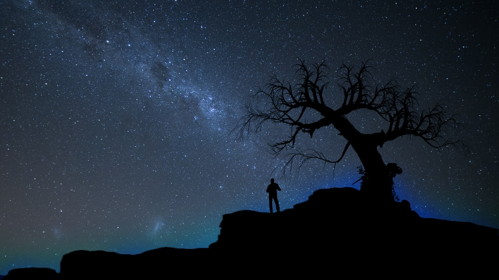 silhouette of person standing beside bare tree under stary sky