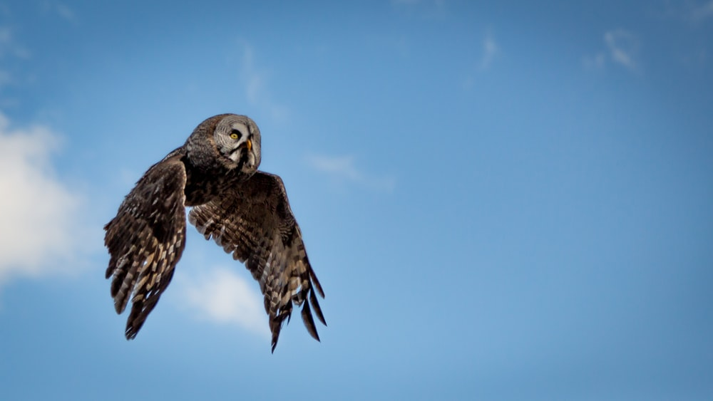 low angle photography of flying brown and gray owl