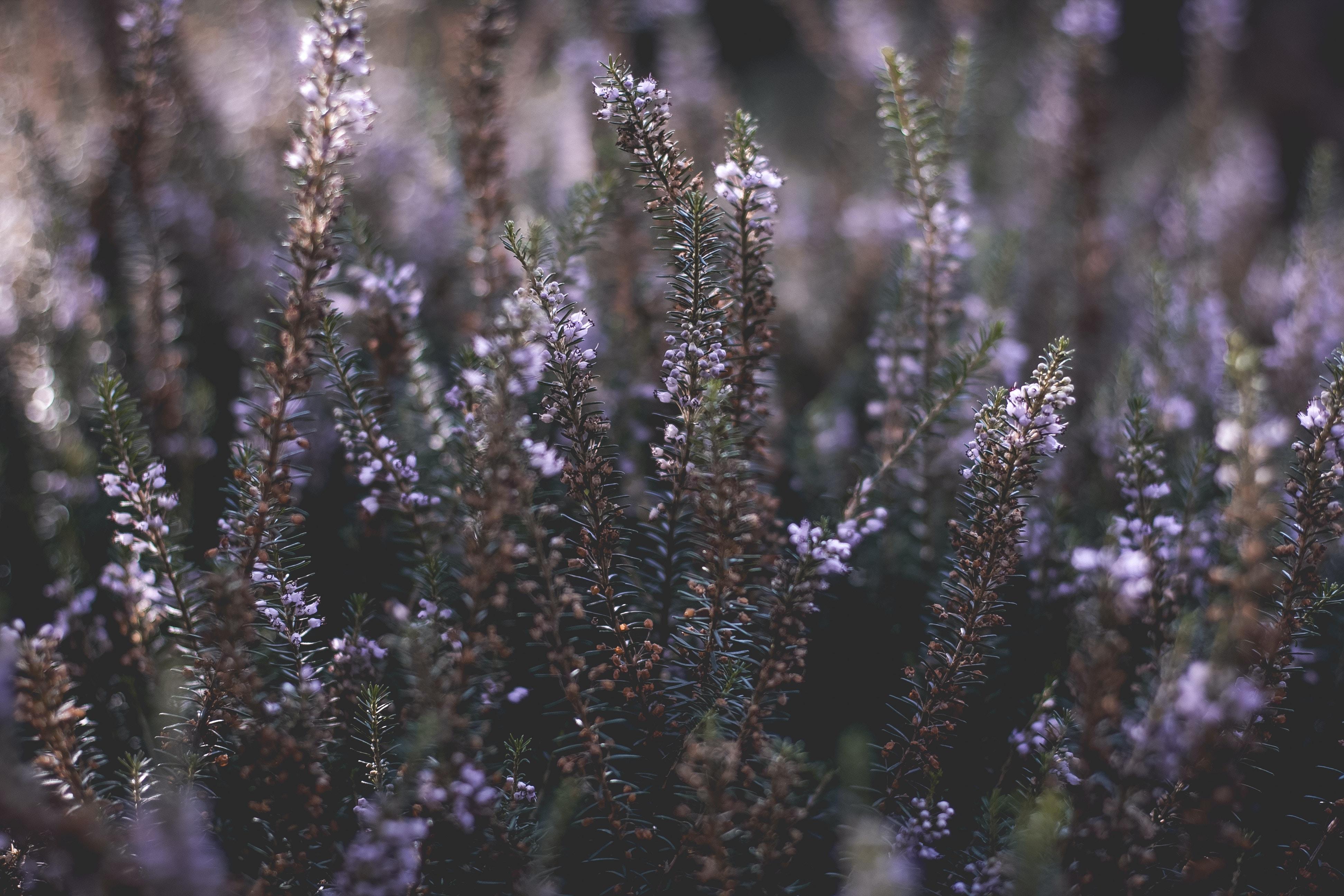 purple petaled flowers during daytime