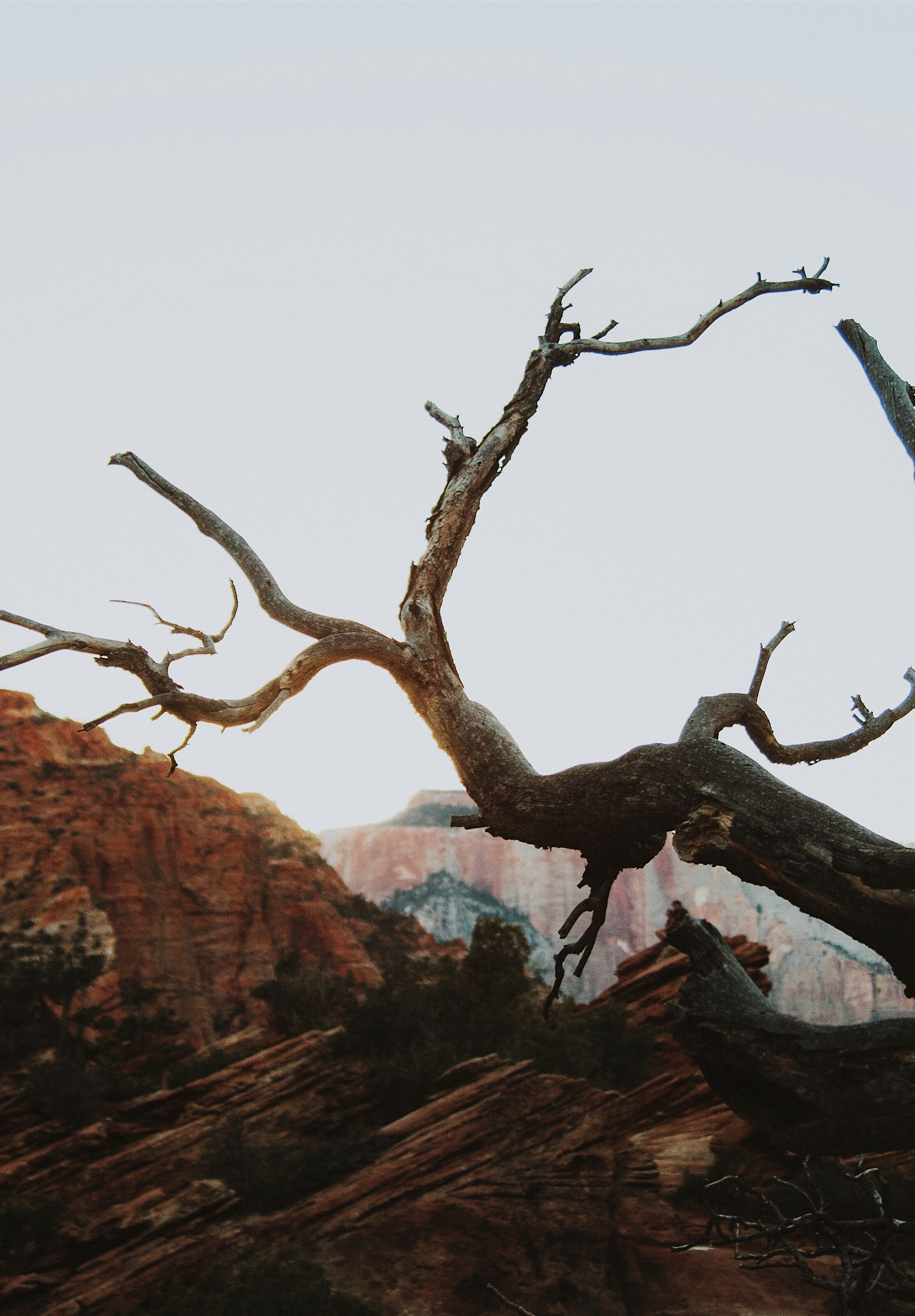 bare tree near mountains during daytime