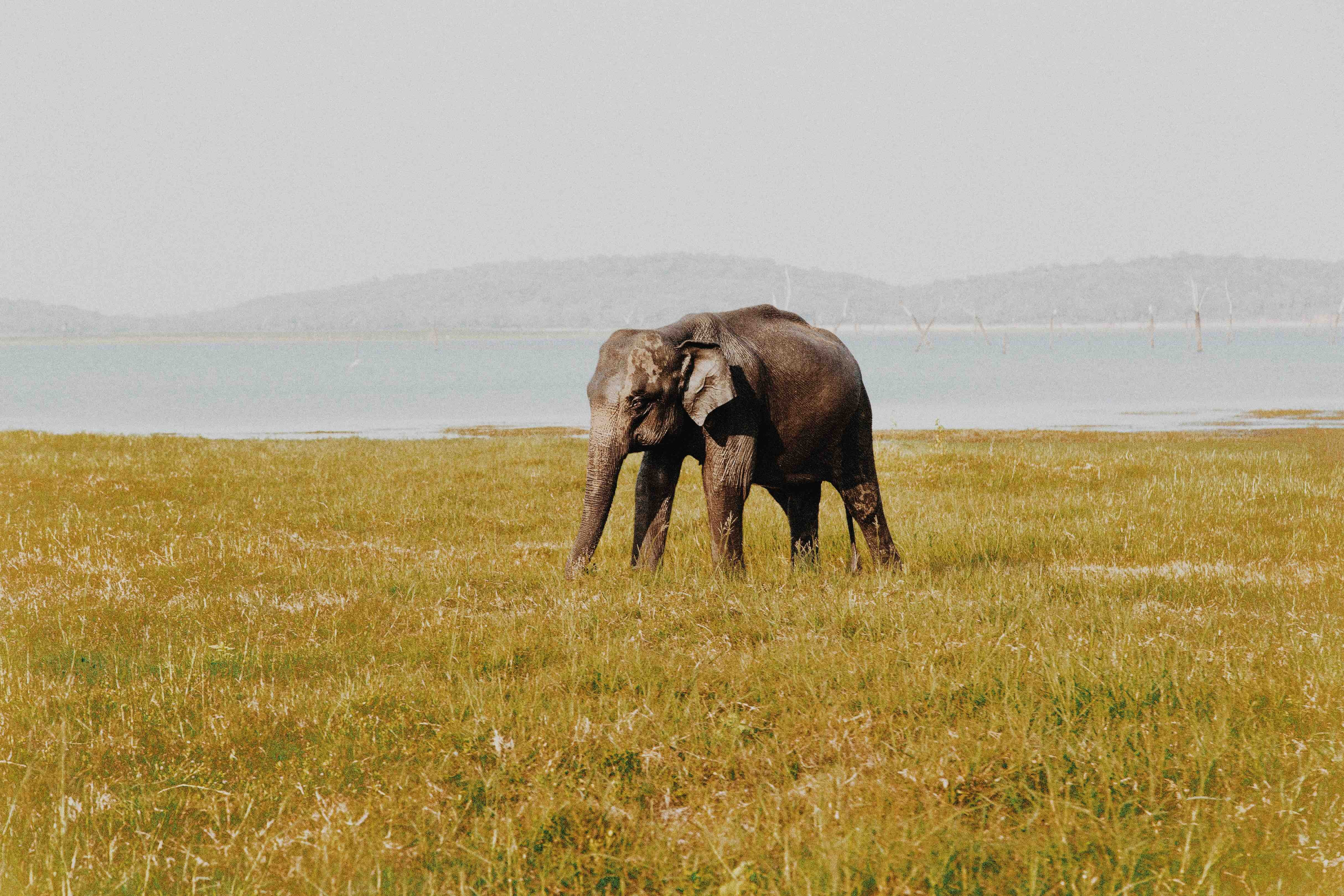 grey elephant in middle of field during daytime