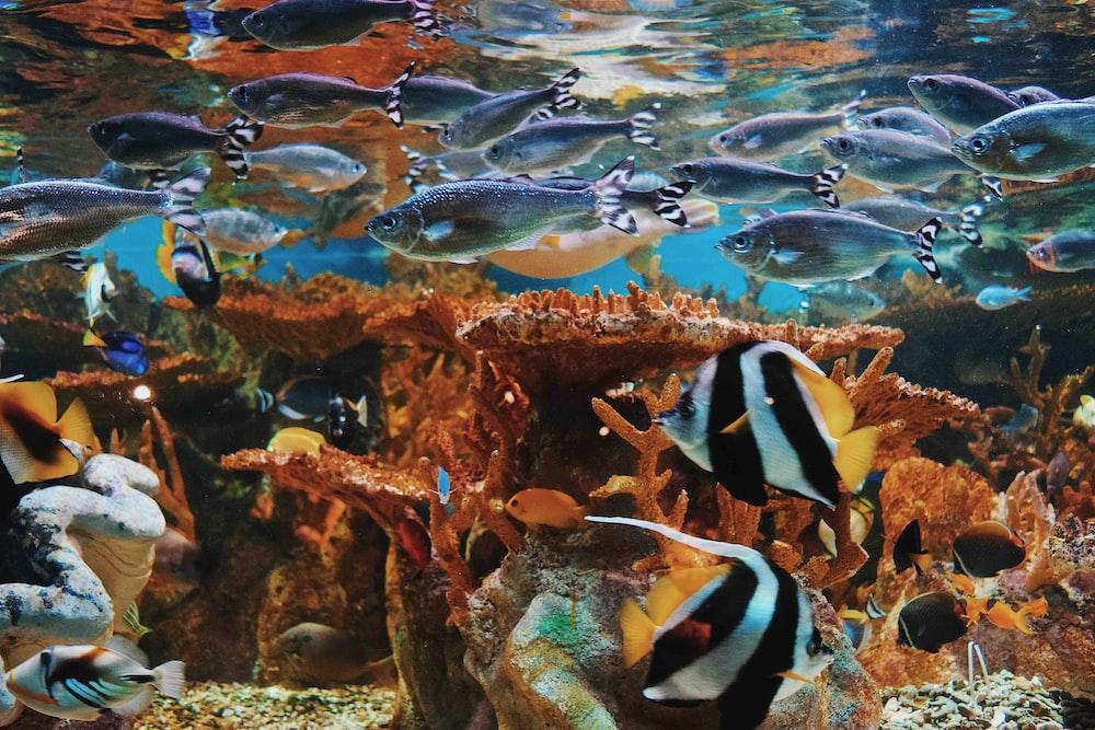 assorted-varieties of pet fish