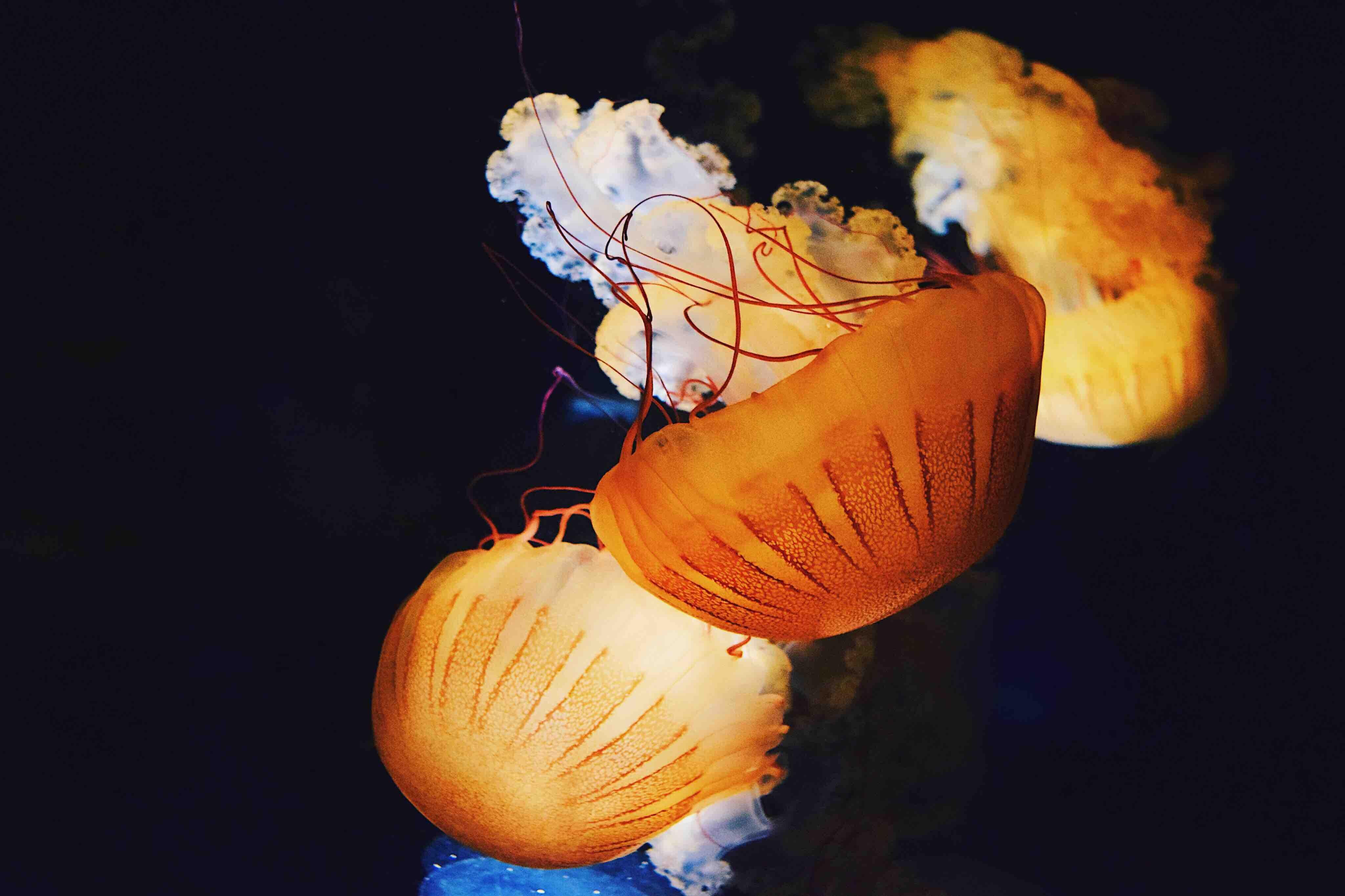 jellyfish swimming underwater
