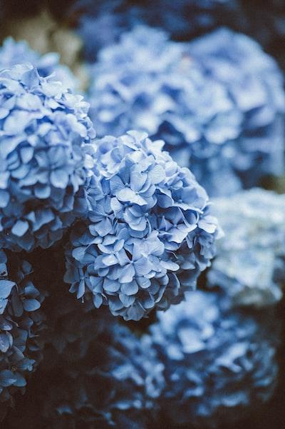 niebieskie-kwiaty