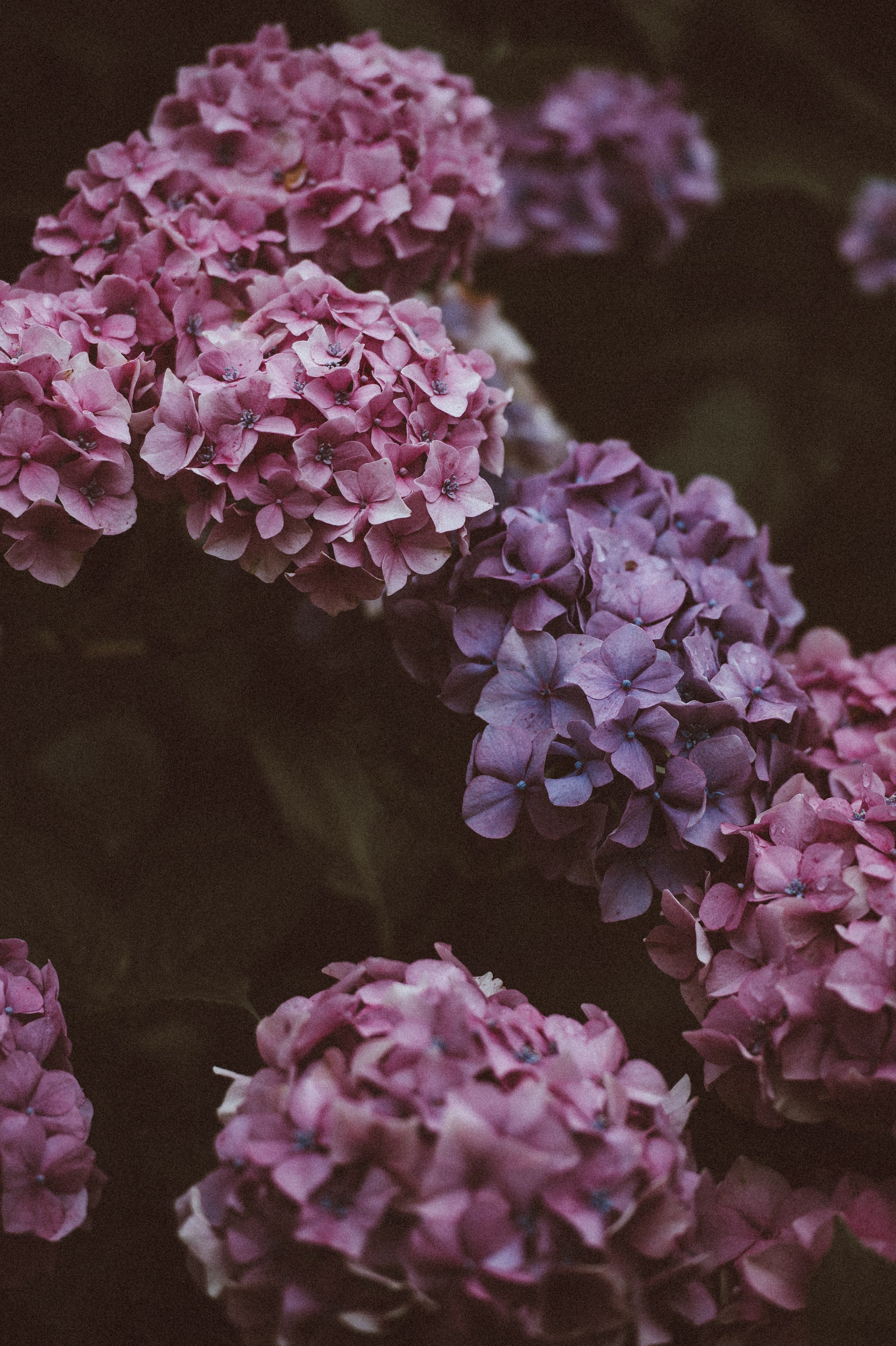 photo of pink and purple petaled flowers