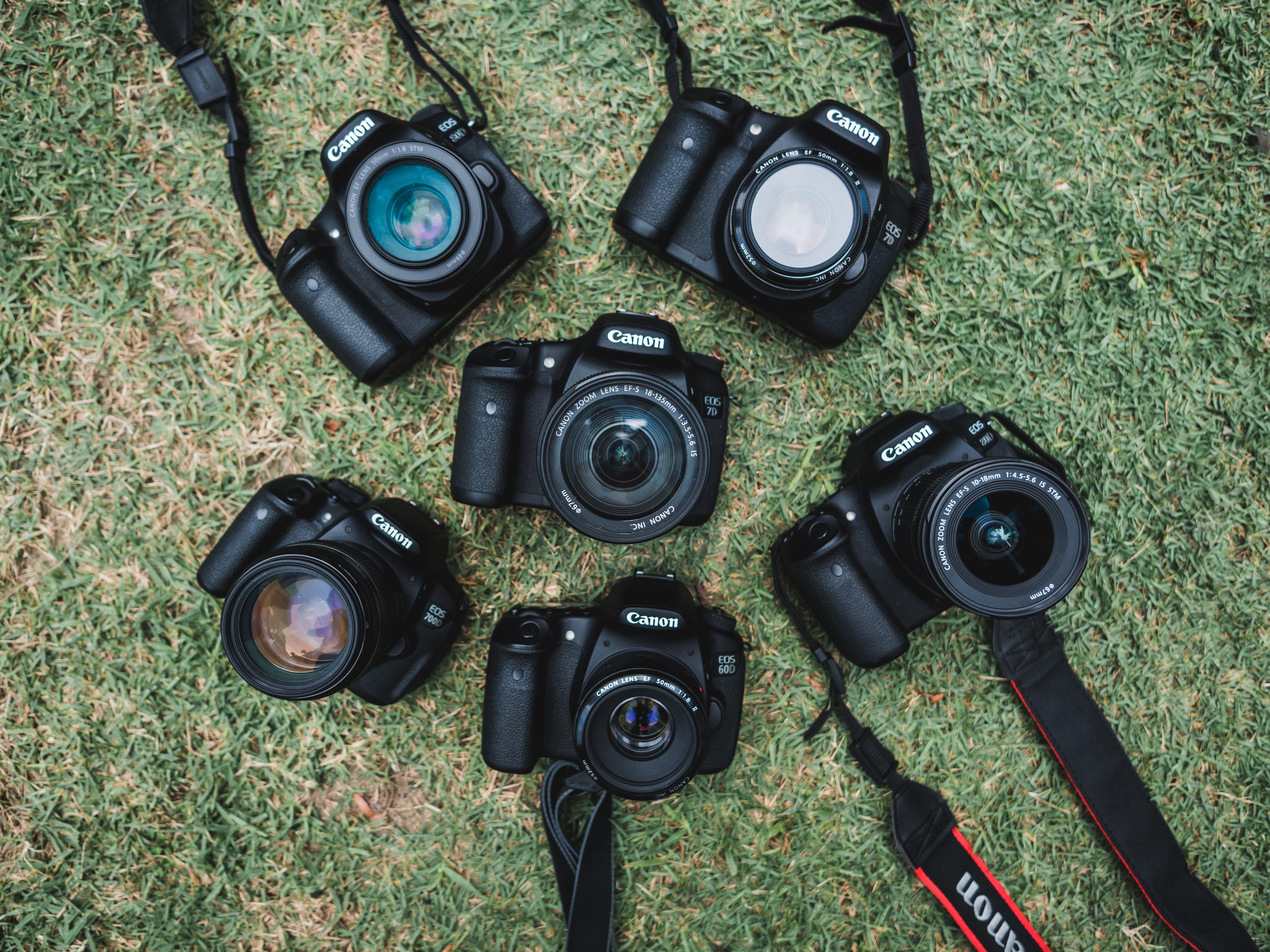 six black Canon DSLR cameras on green grass field