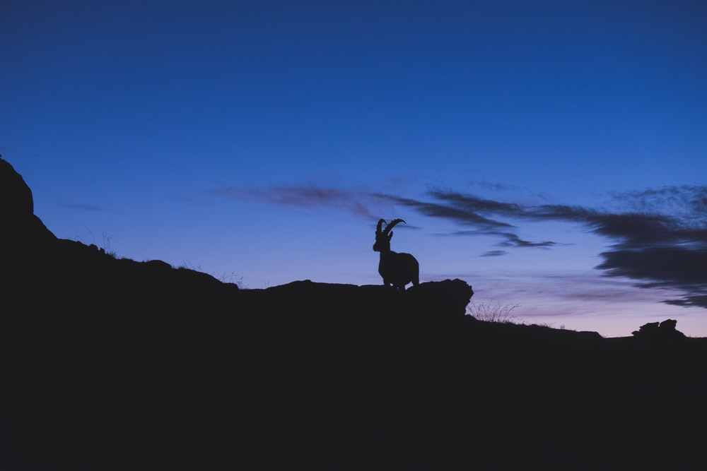 silhouette of mountain ram on rock formation during sunset