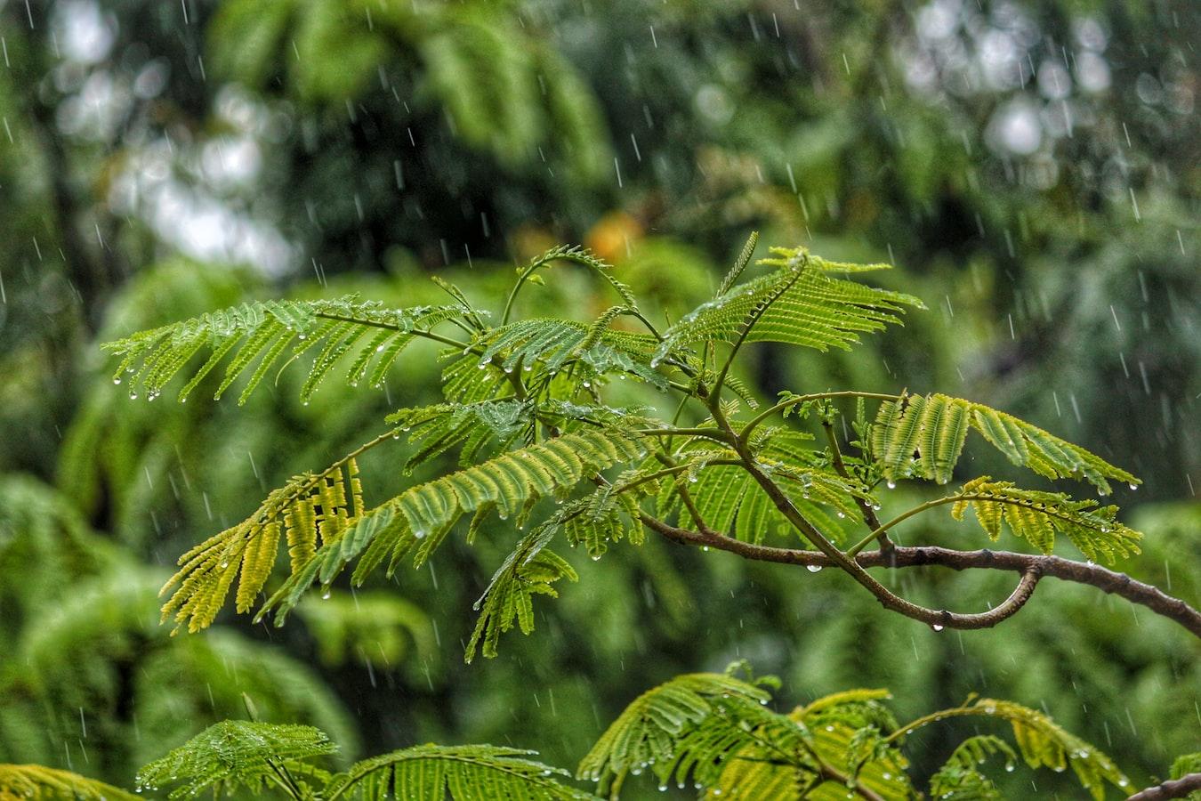 Regen tropft auf die Blätter einer Pflanze