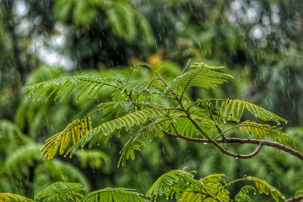 macro shot photography of tree during daytime while raining