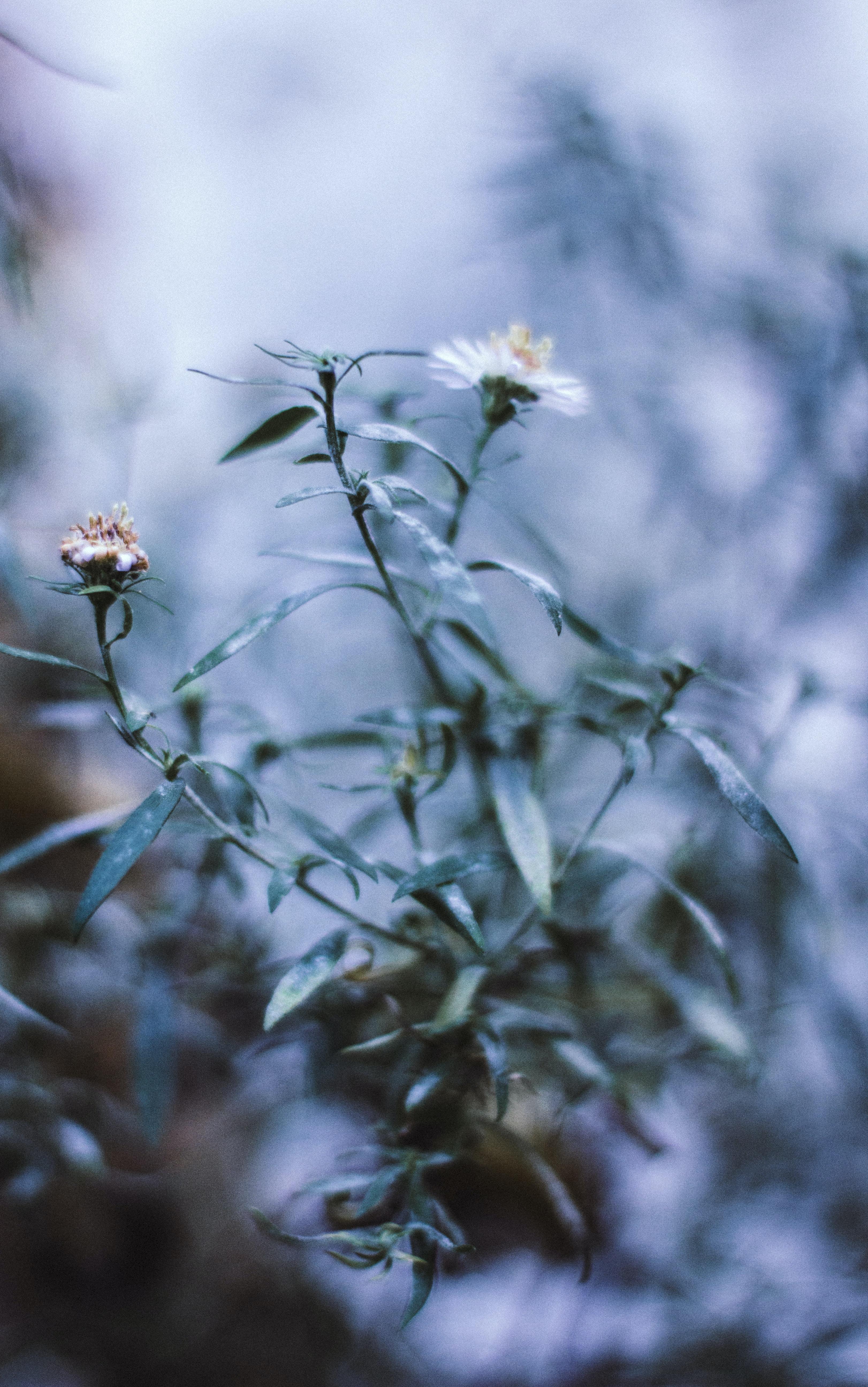 macro shot photography of flowers