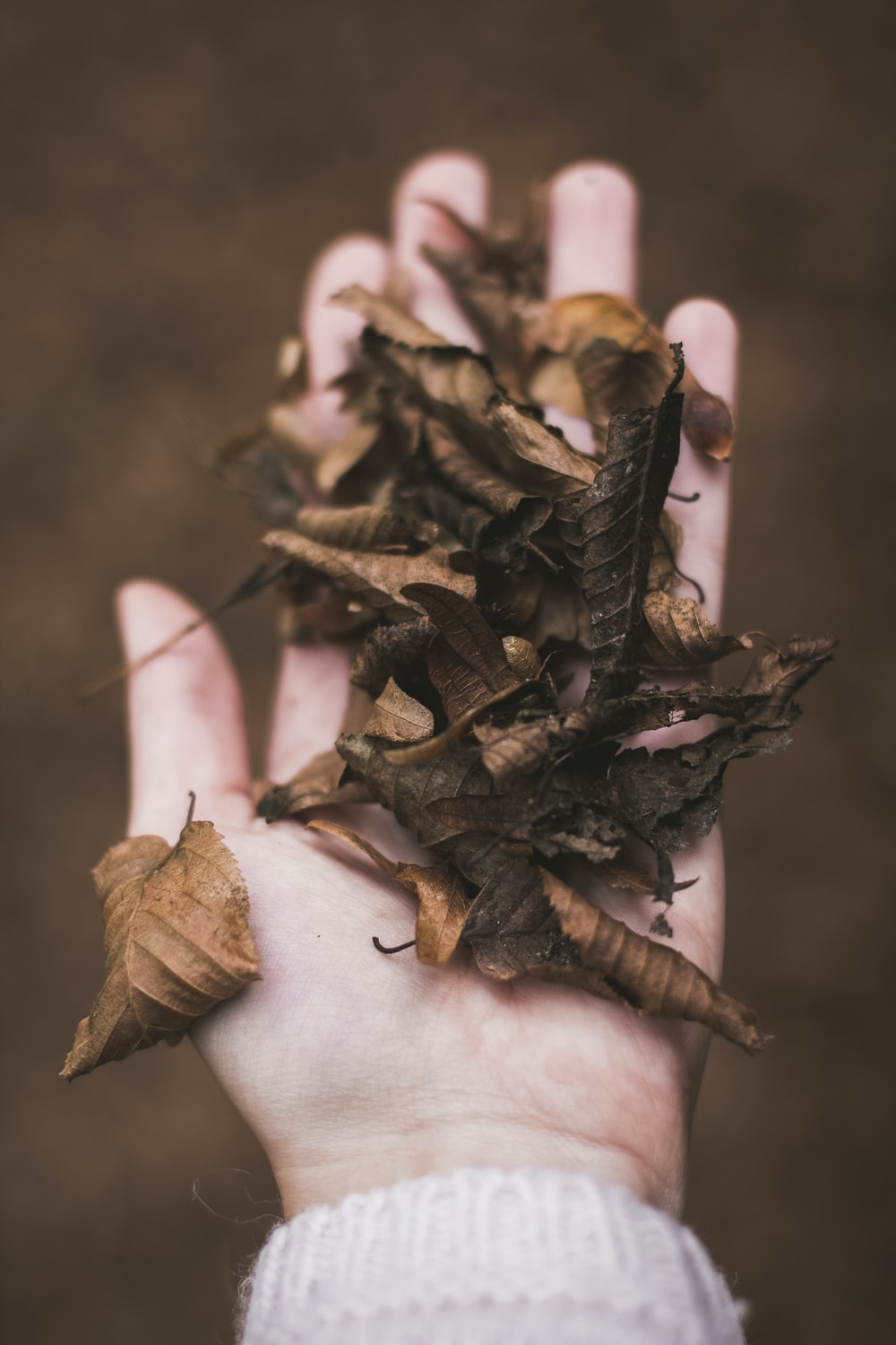dried leaves in person's palm