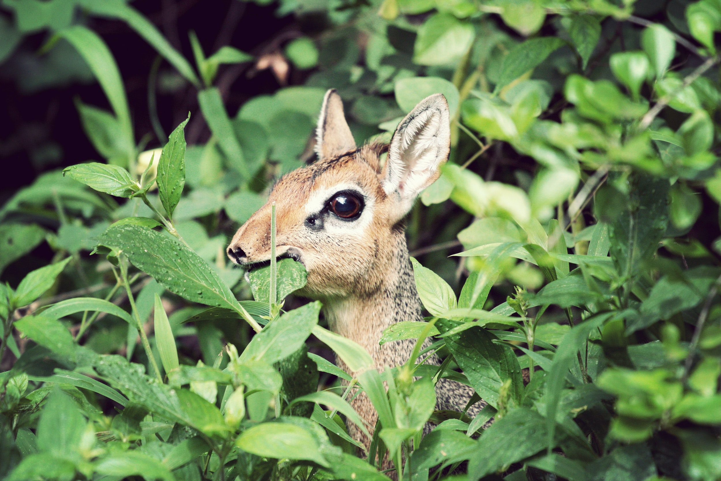 brown and gray deer on green leaf