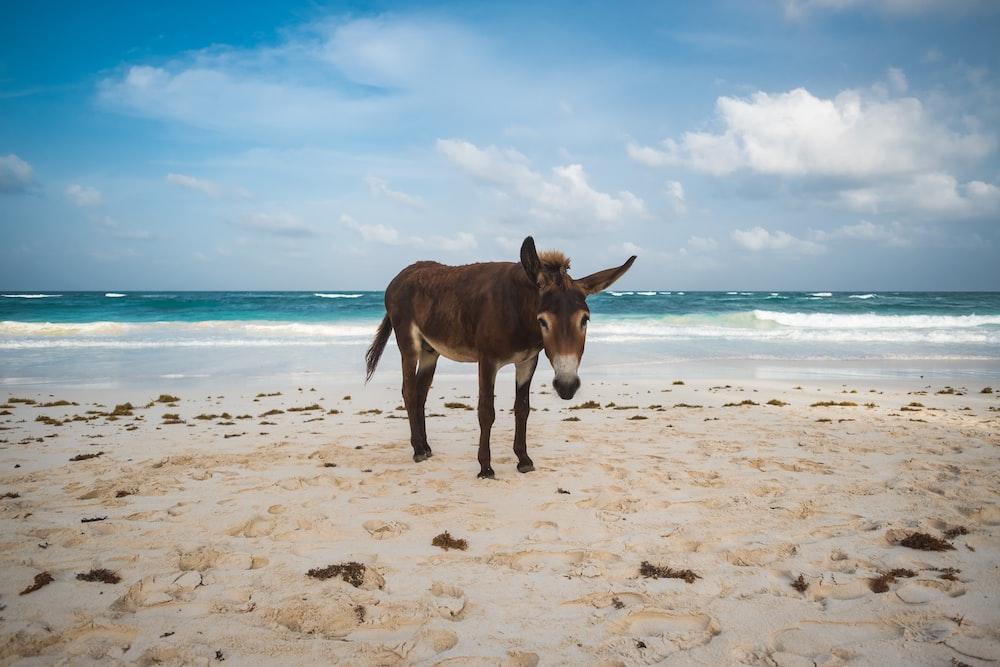 brown donkey near beach during daytime photo