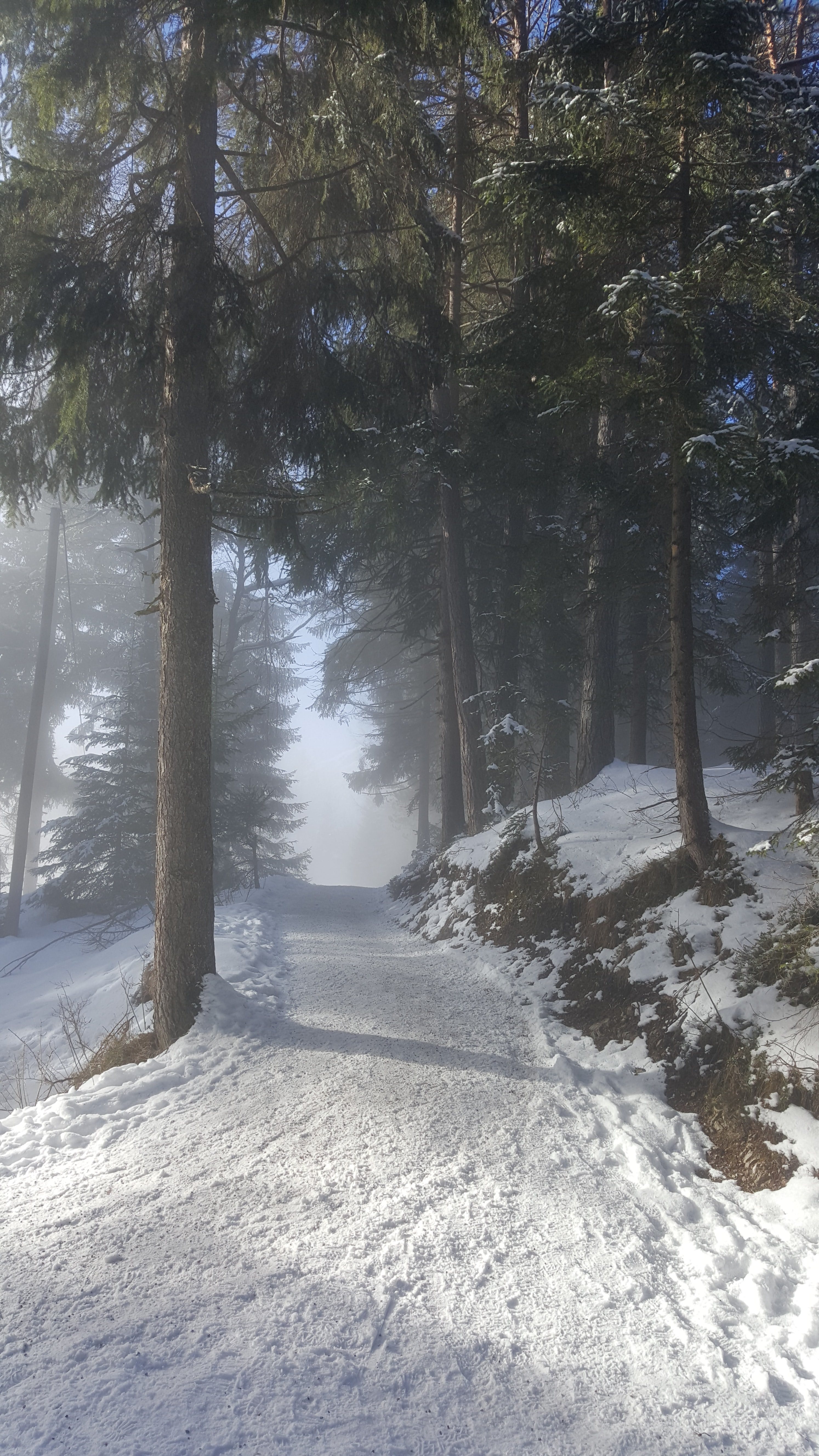 A road in a forest in Seefeld covered with a thick layer of snow