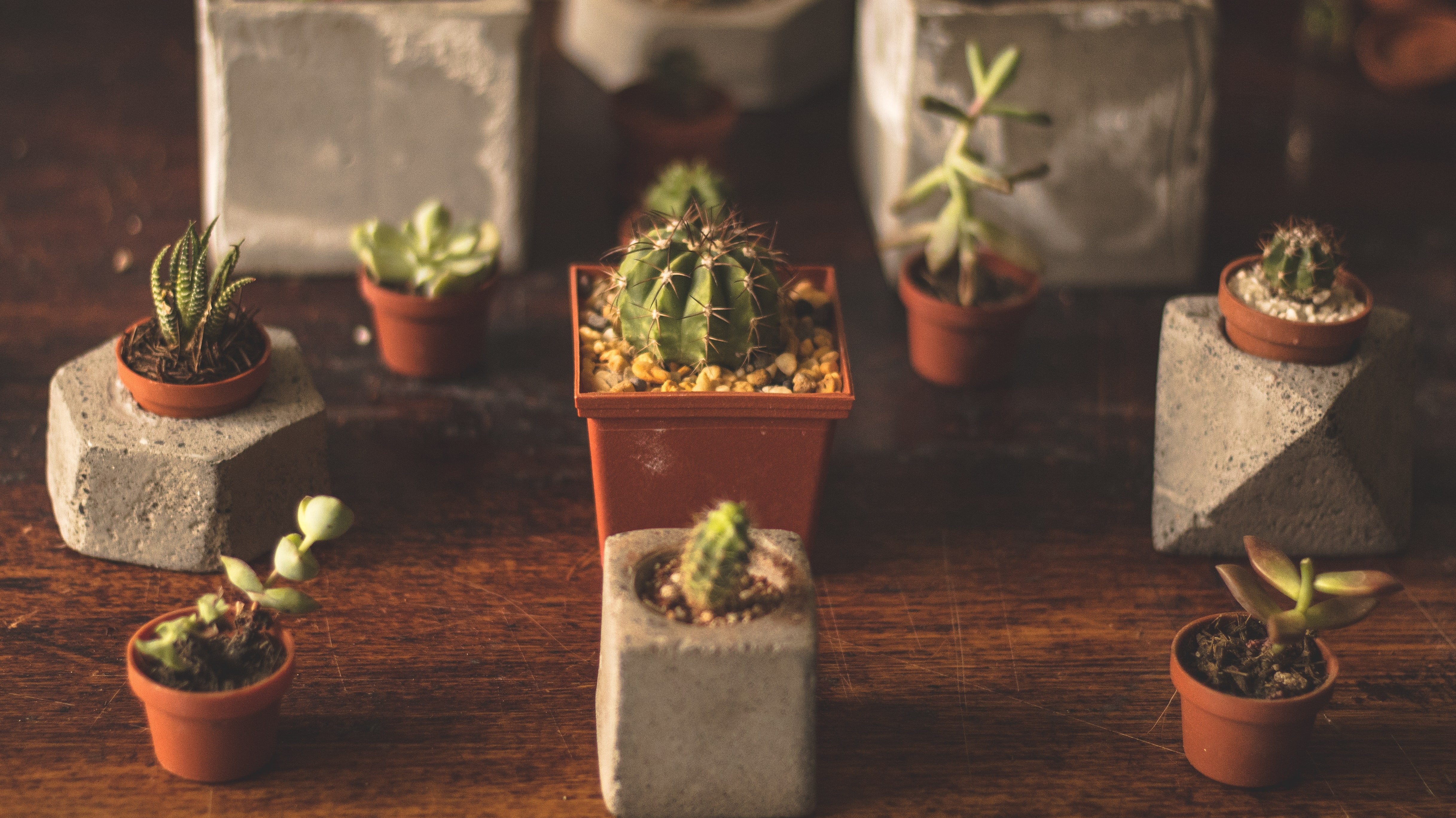 Green cactus plant in rock vase on a wooden table in Mexico