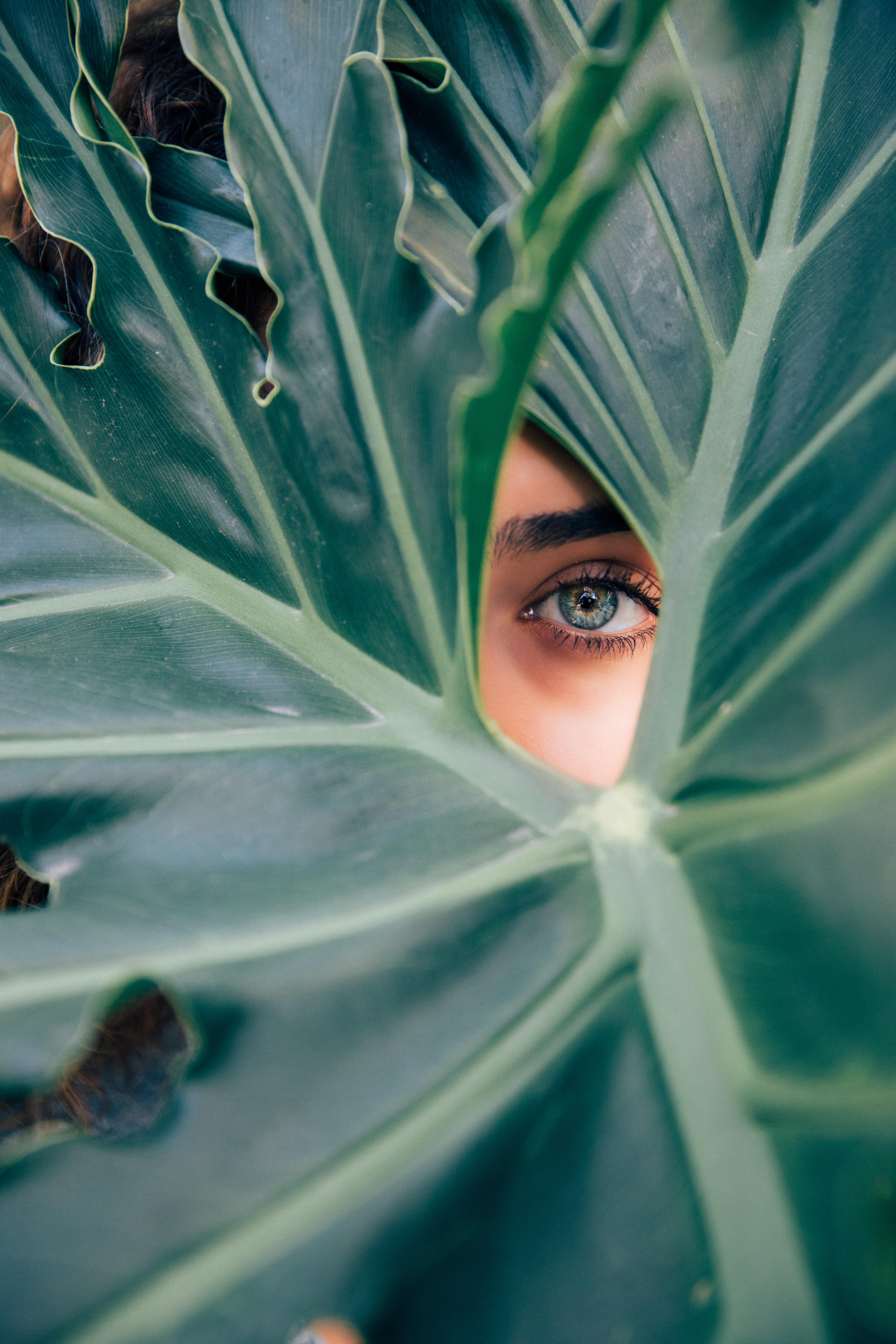 Woman's eye peers through large green leaves