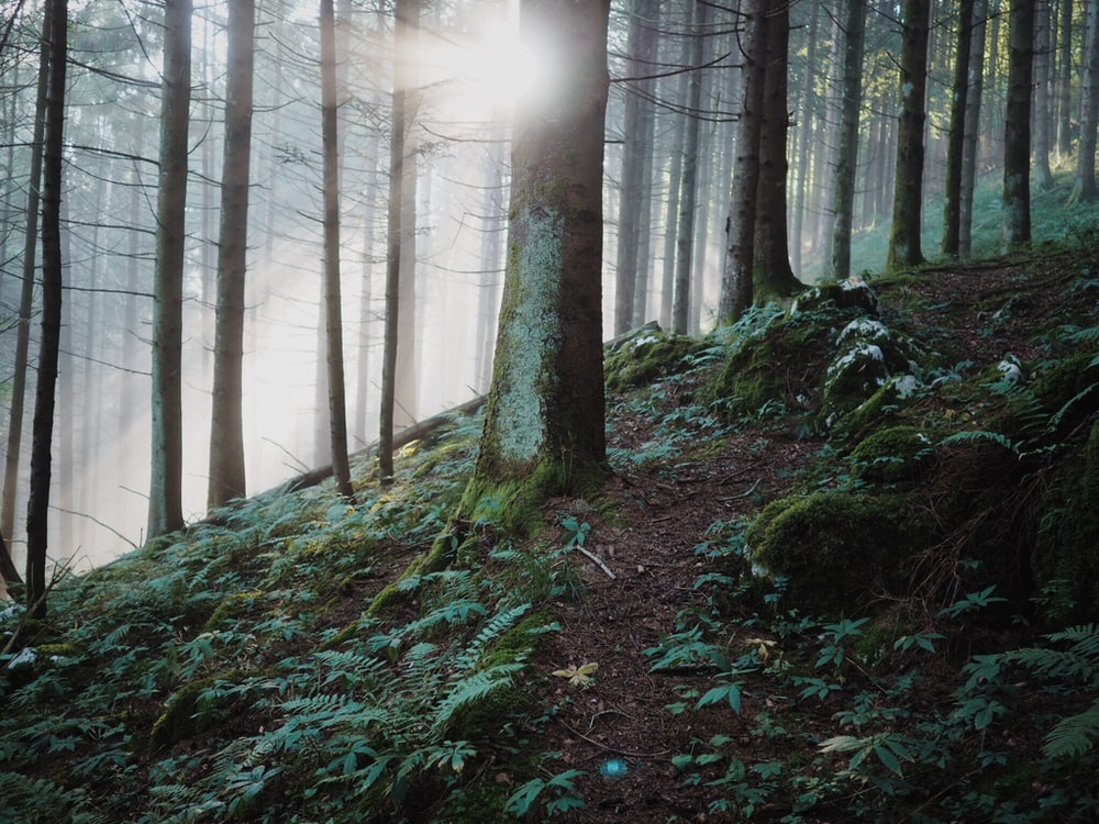 forest and sunlight