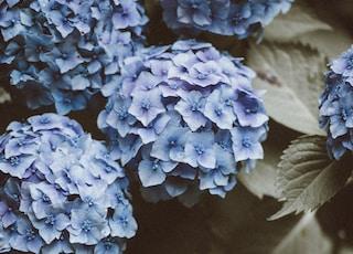 shallow focus petal flowers