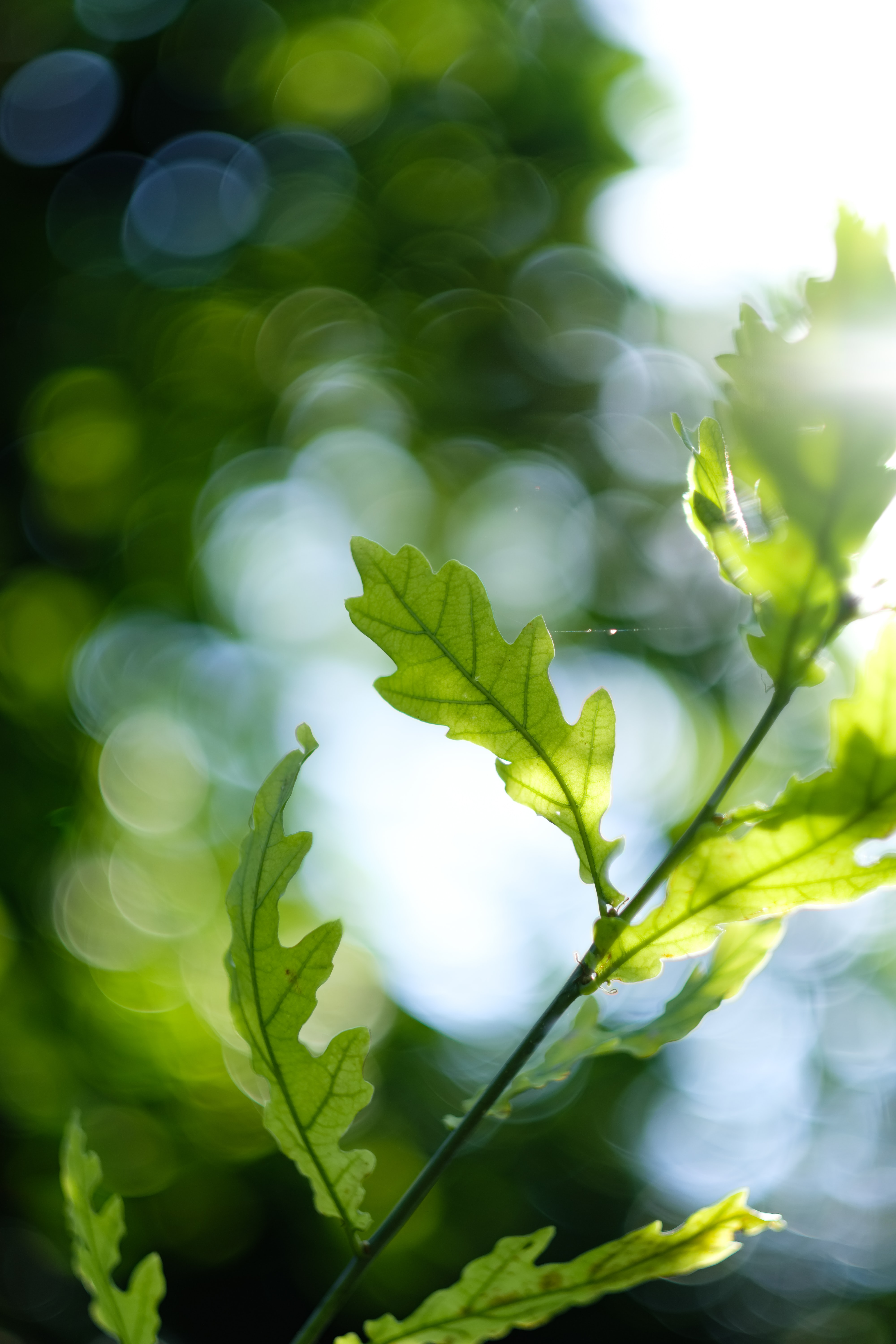 Leaves and branches bask in the sunlight