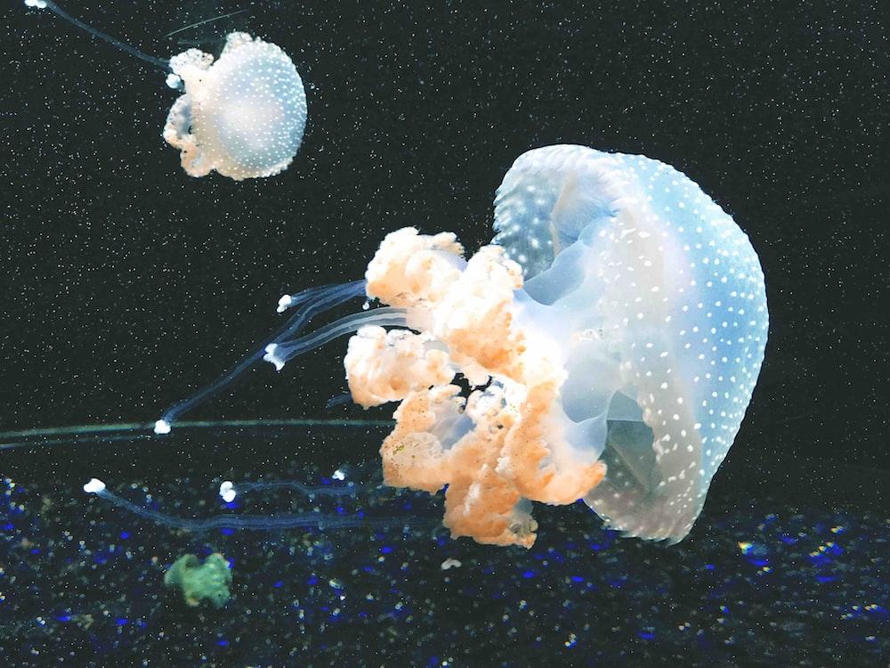 closeup photo of white jellyfish