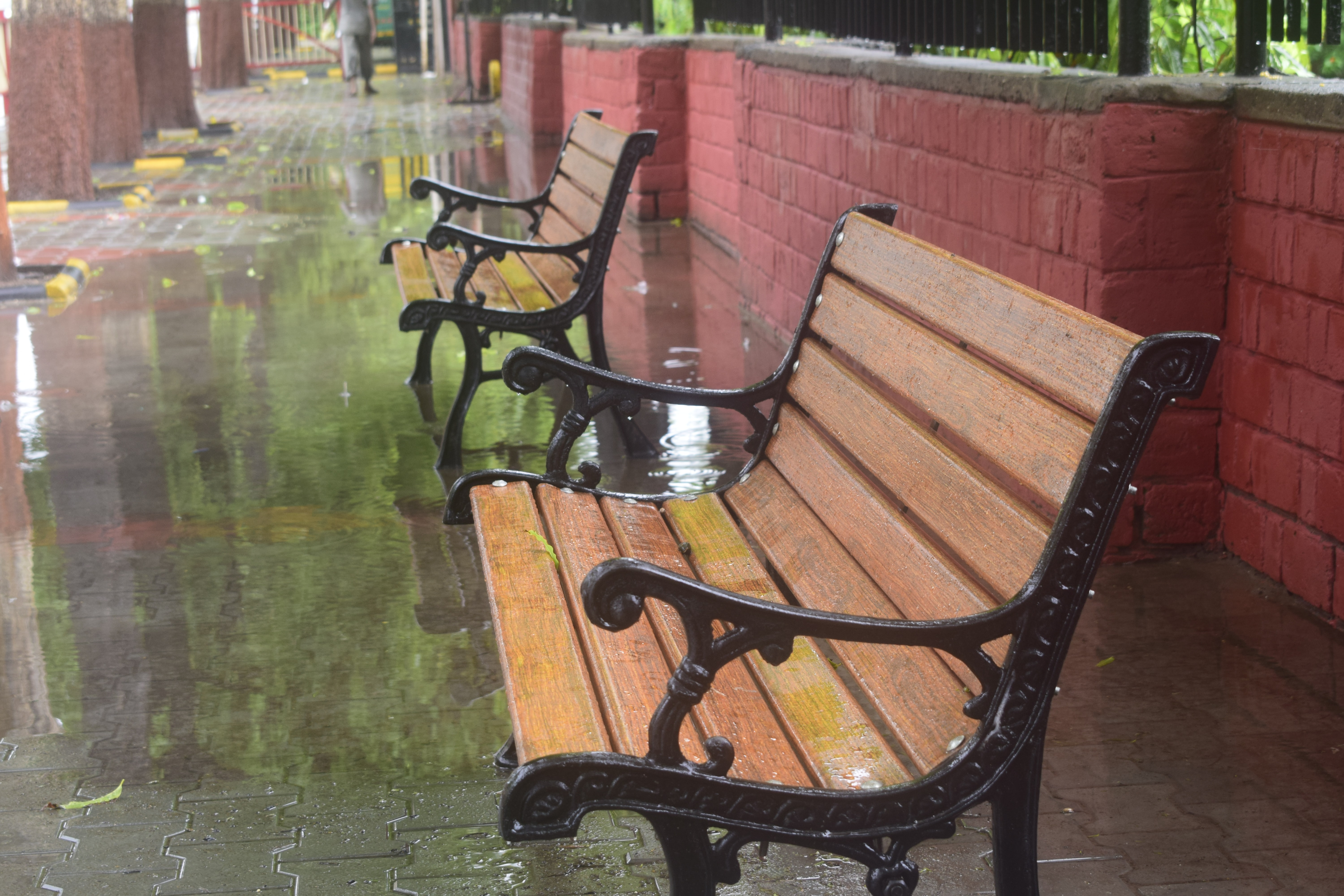 Pair of park benches wet with rain in the park