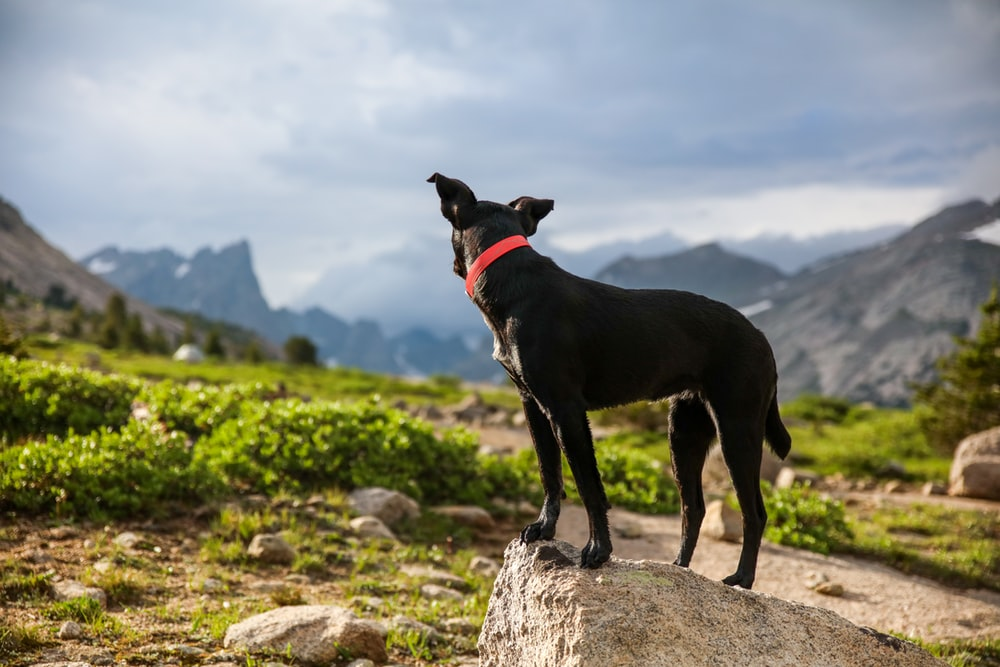 black dog with red collared standing on gray stone during cloudy day