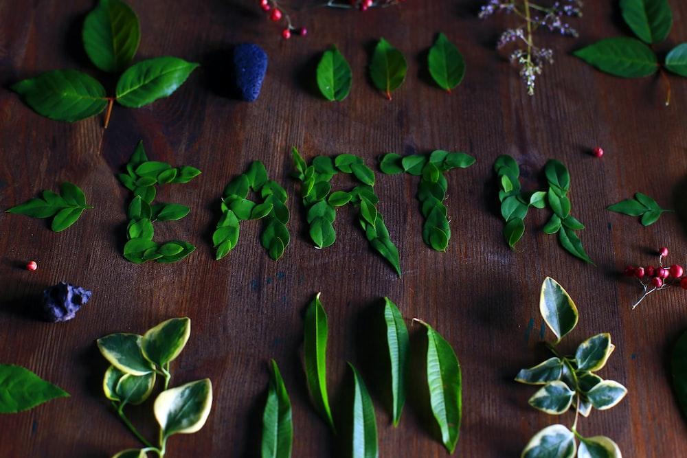 leaves on table