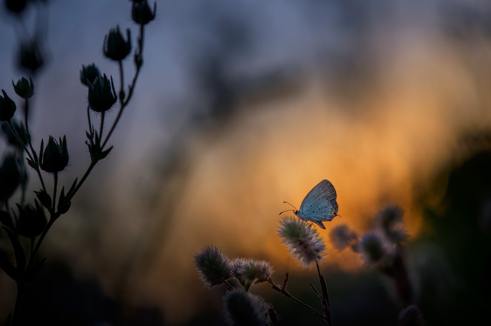 selective focus photography of butterfly perched on petaled flower