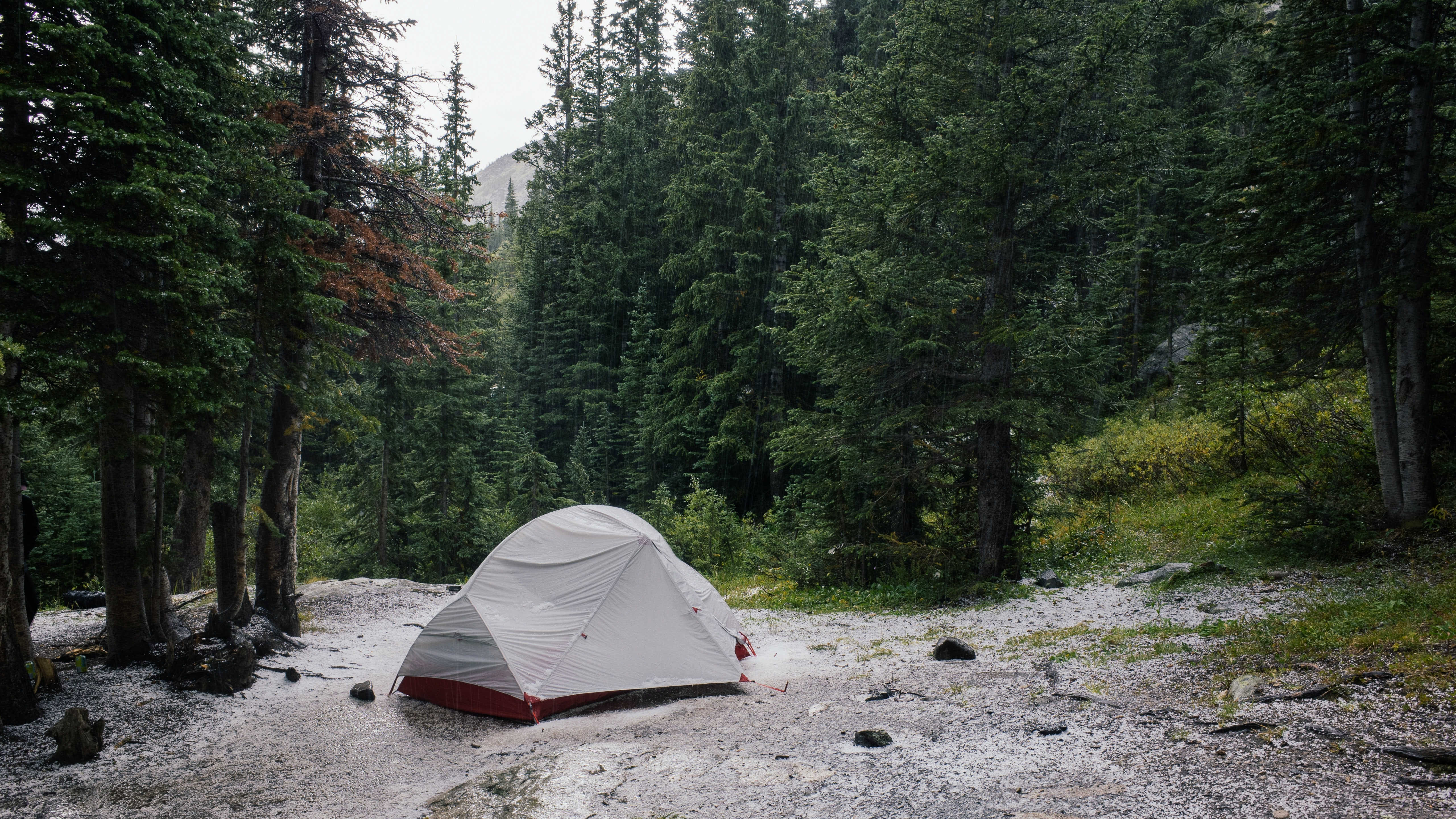 A single tent pitched on a gravel surfact amidst a wooded area with bright green trees