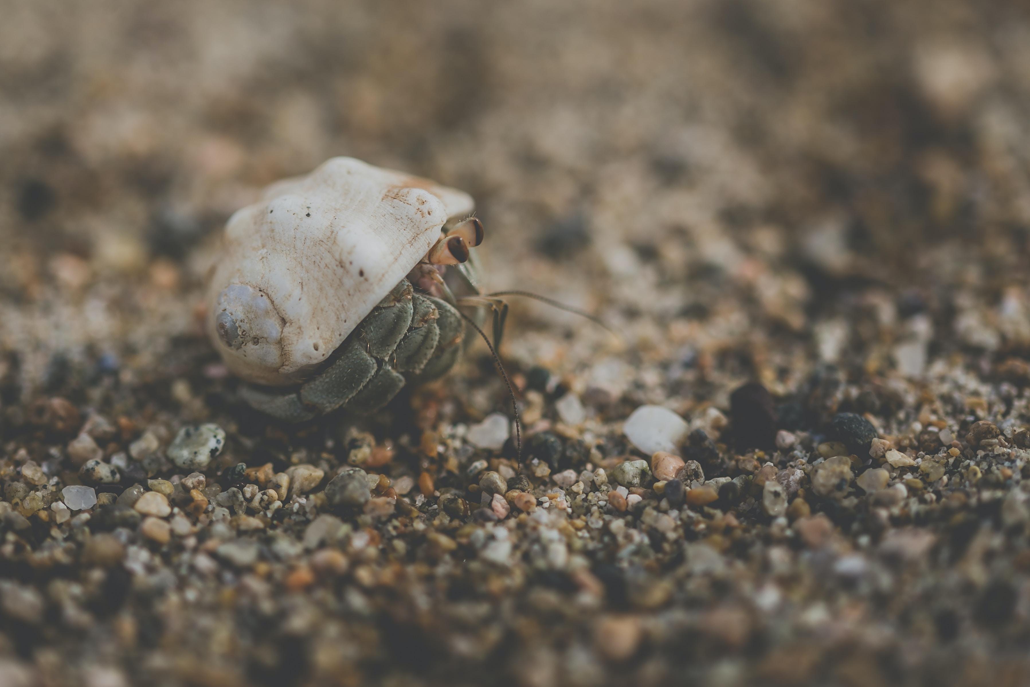 beige sea animal on selective focus photo