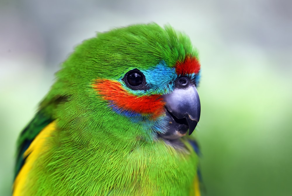 500 Colorful Bird Pictures Hd Download Free Images On Unsplash