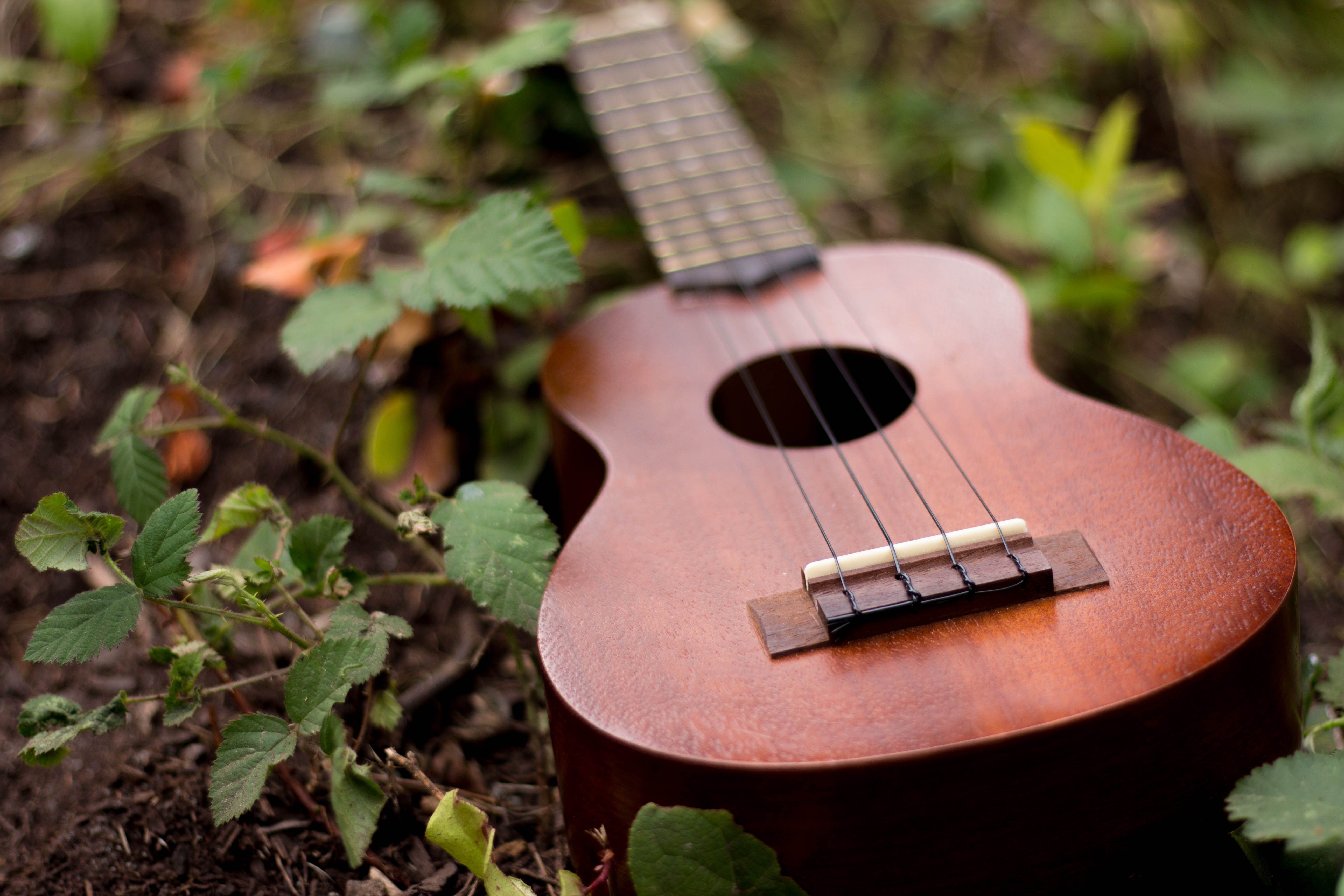 Ukulele with dark wood on ground surrounded by dirt and leaves