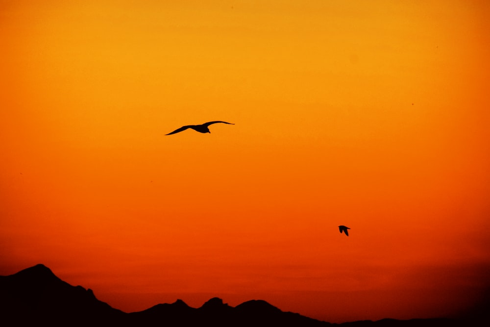 silhouette of flying birds and mountains during orange sunset