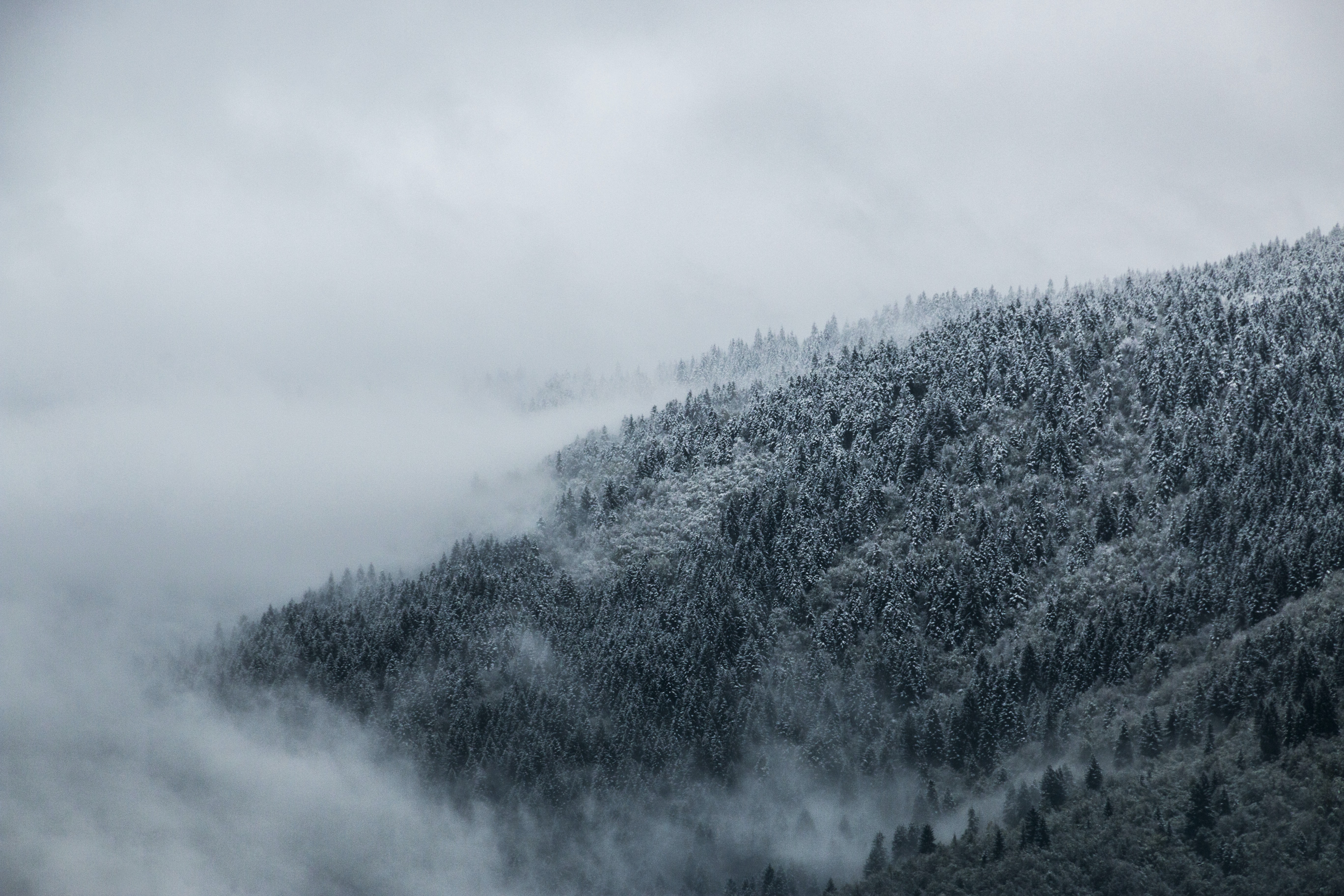 A rolling fog makes it way up a forest of frosty trees in Ilidža, Bosnia.