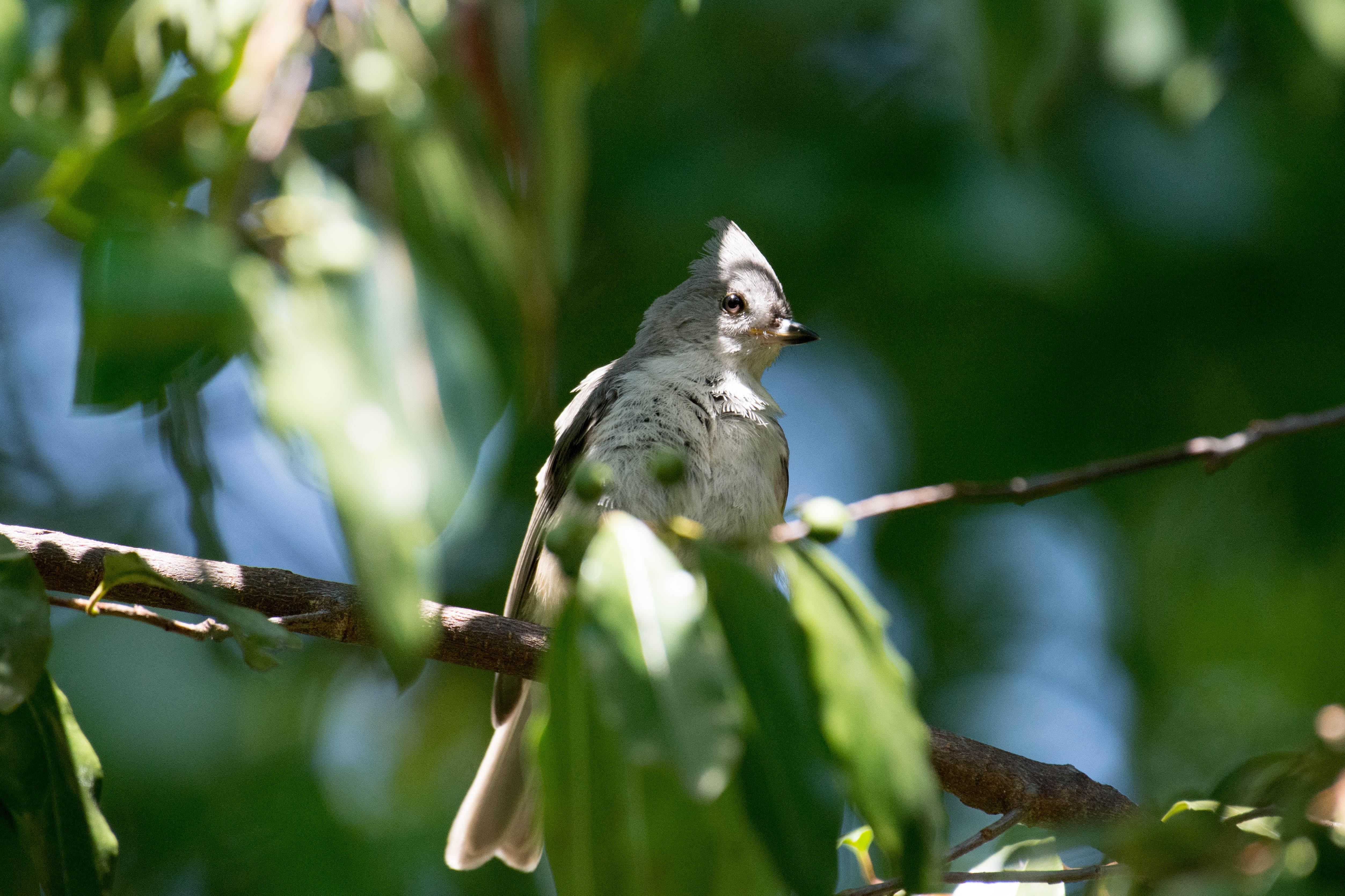 gray perching bird
