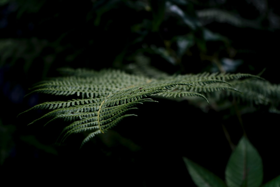 Walking through the forest on the banks of  a river, it was dark but there was light poking through…