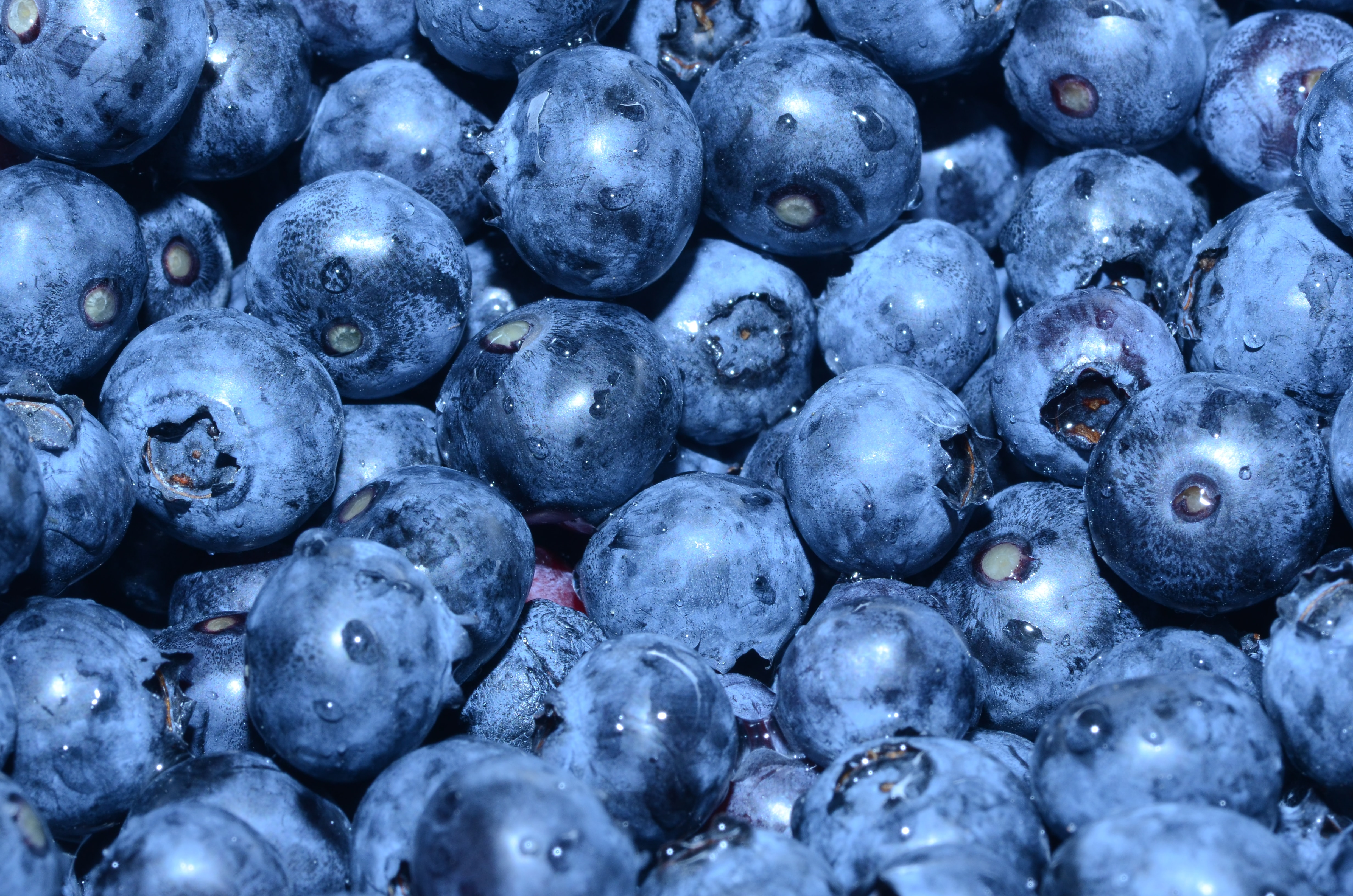 Pile of fresh blueberries gathered for a healthy snack