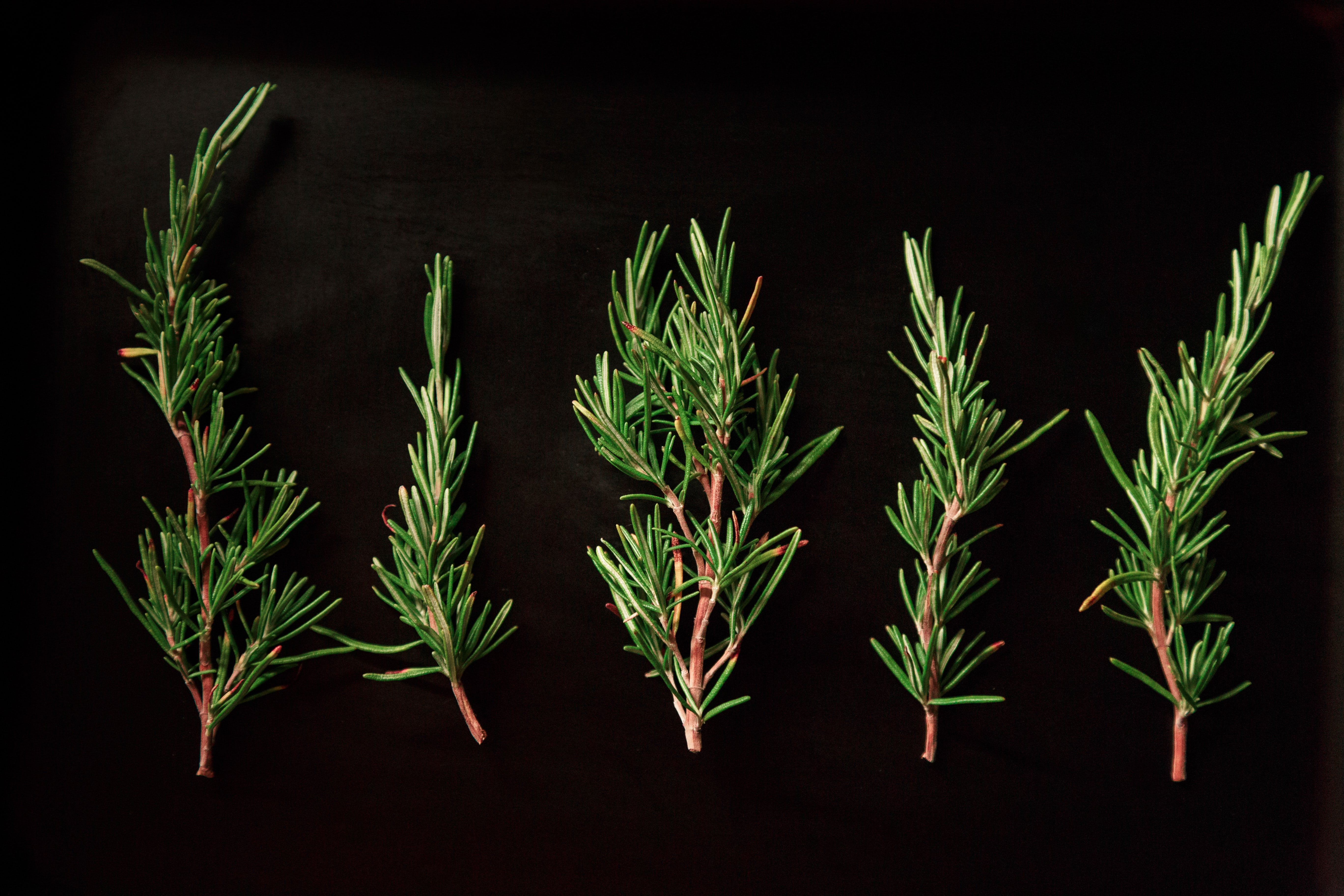 five green pine twigs