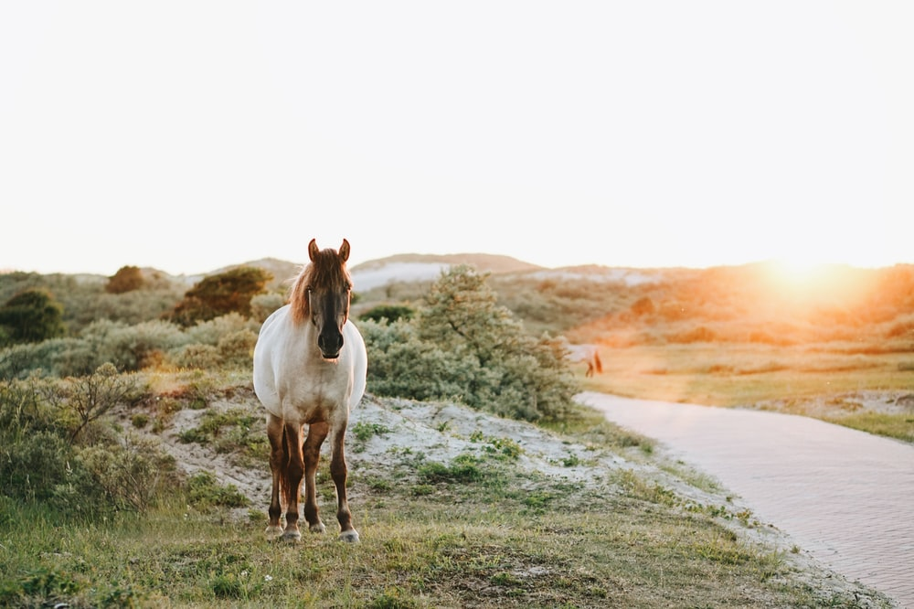 white and brown horse at grass field