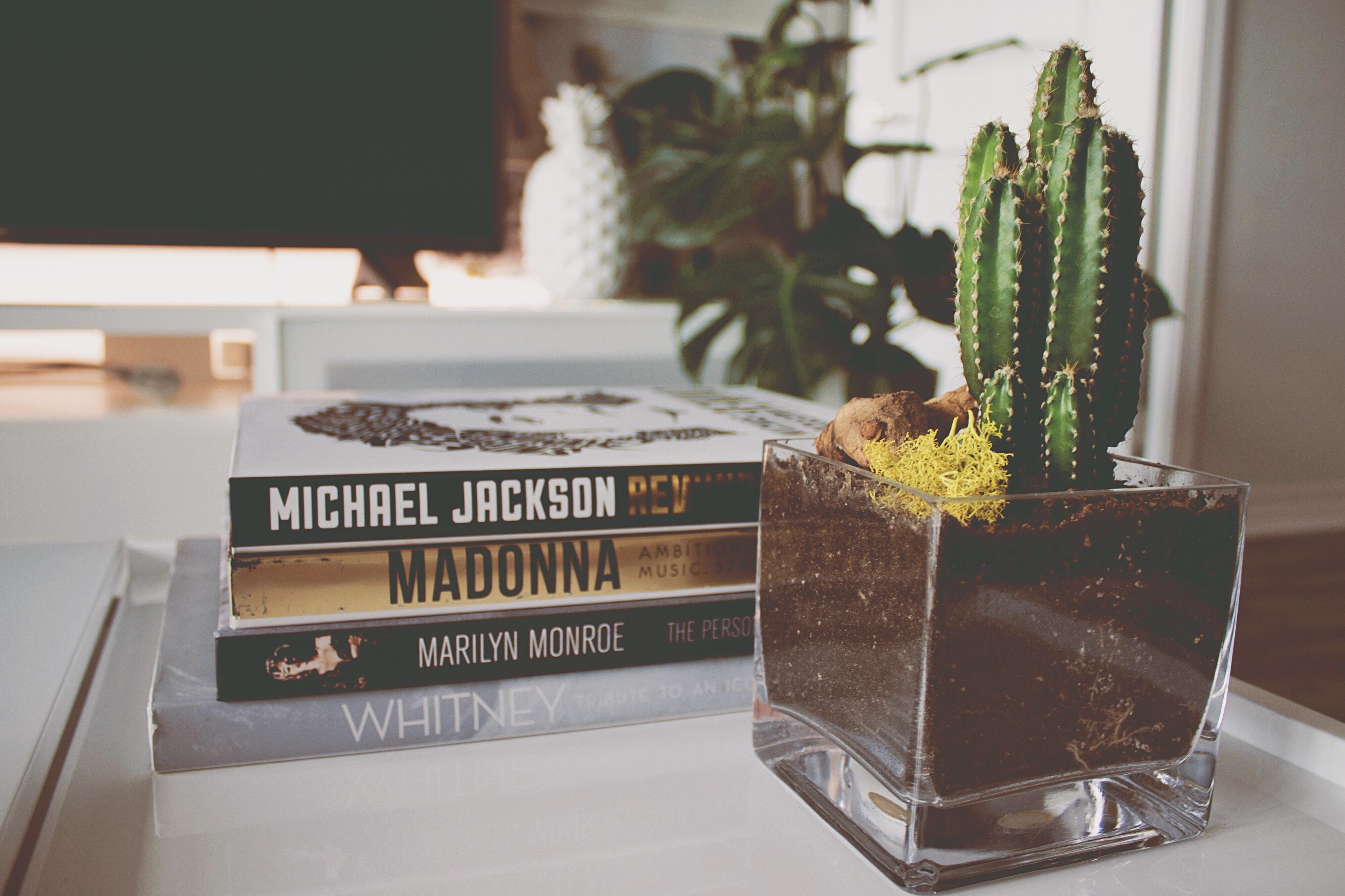 cactus near four novel books