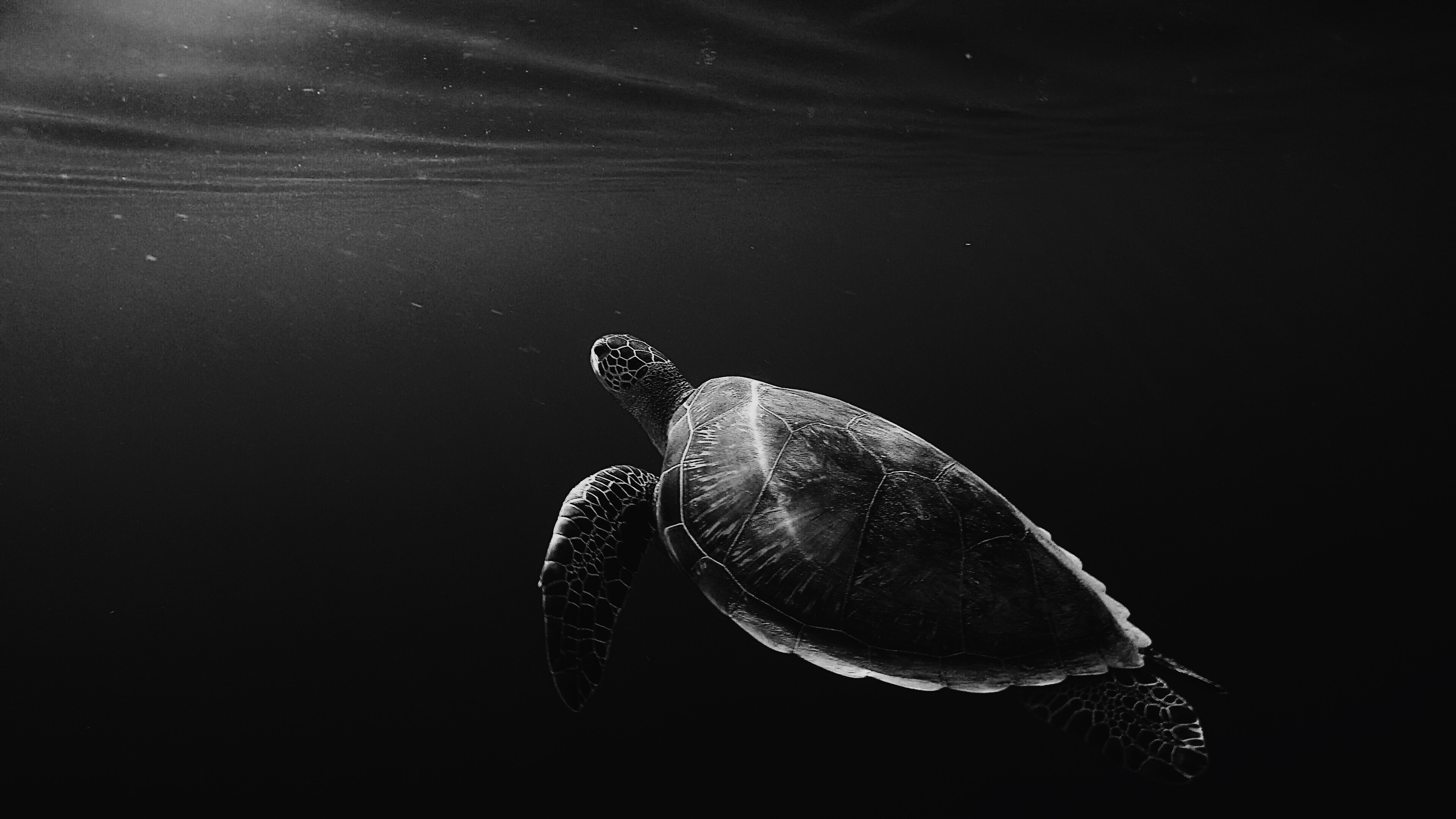 silhouette of sea turtle underwater