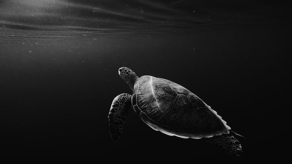 silhouette of sea turtle underwater