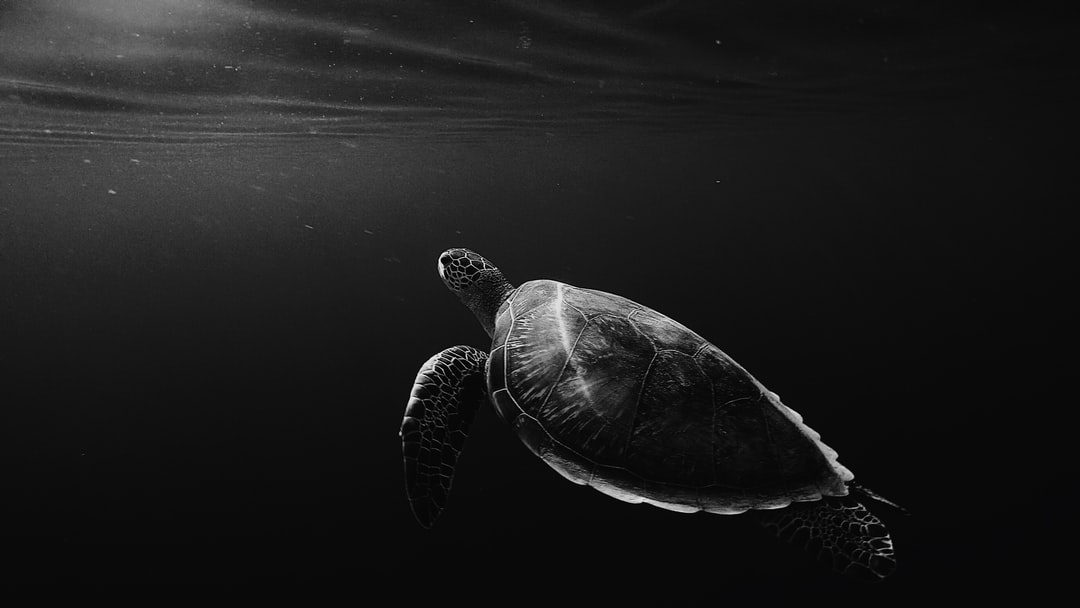 Setting up Tortoise ORM with FastAPI